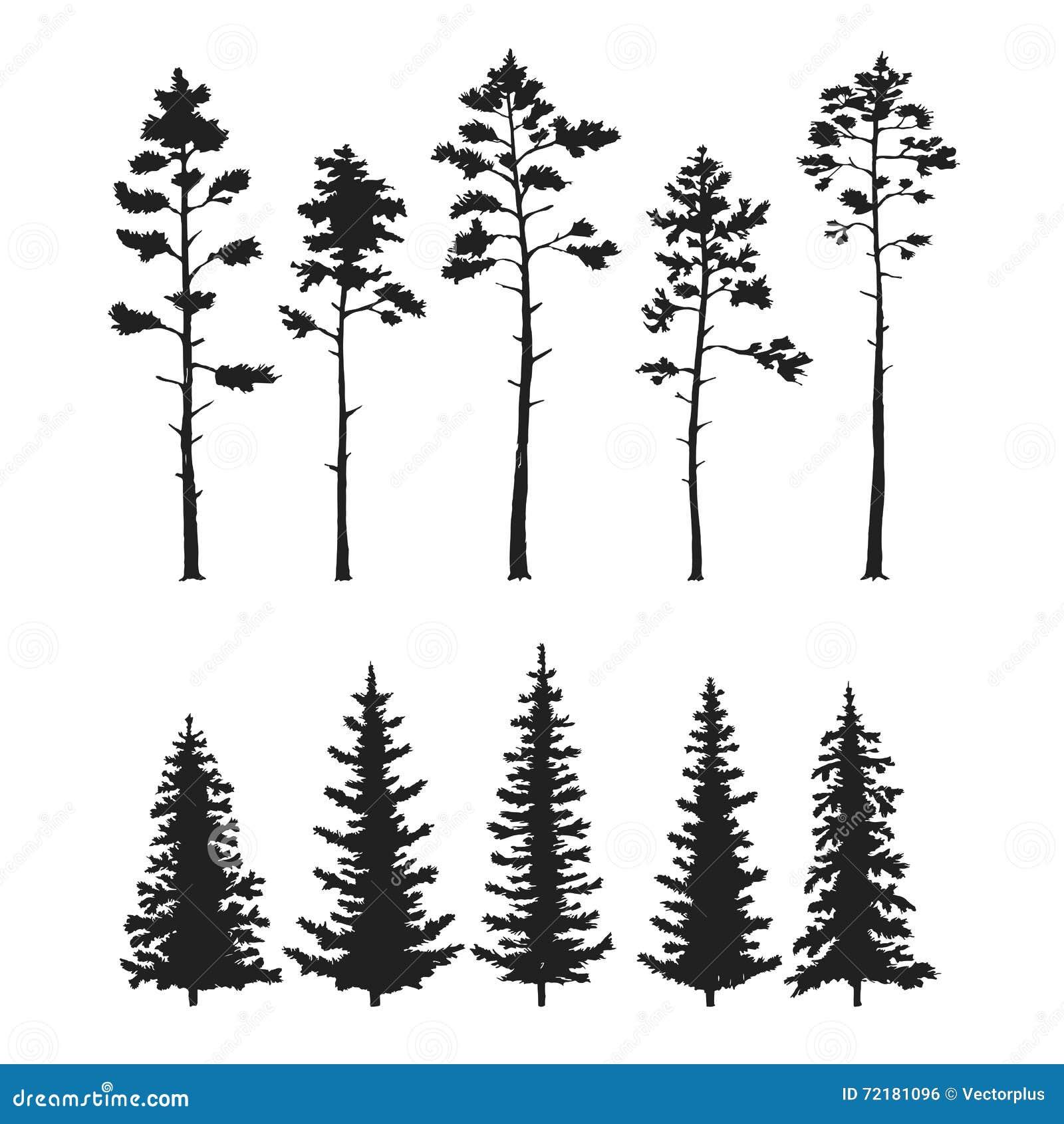 Sistema del vector con los árboles de pino aislados en el fondo blanco