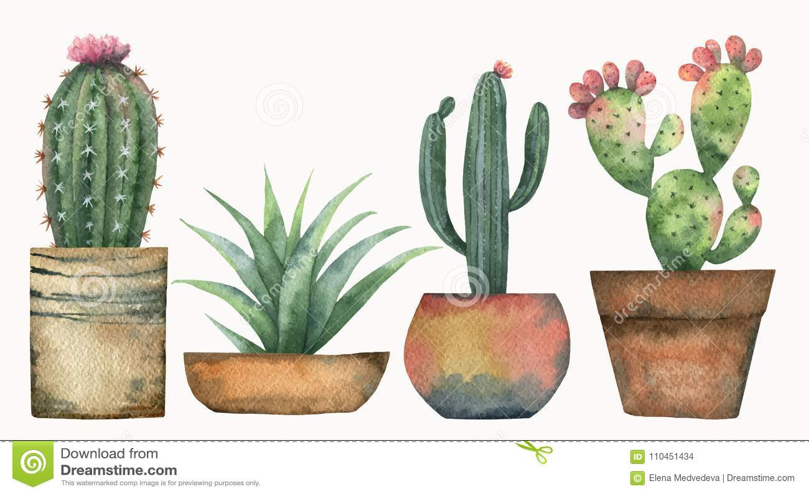Sistema del vector de la acuarela de cactus y de plantas for Curso cactus y suculentas