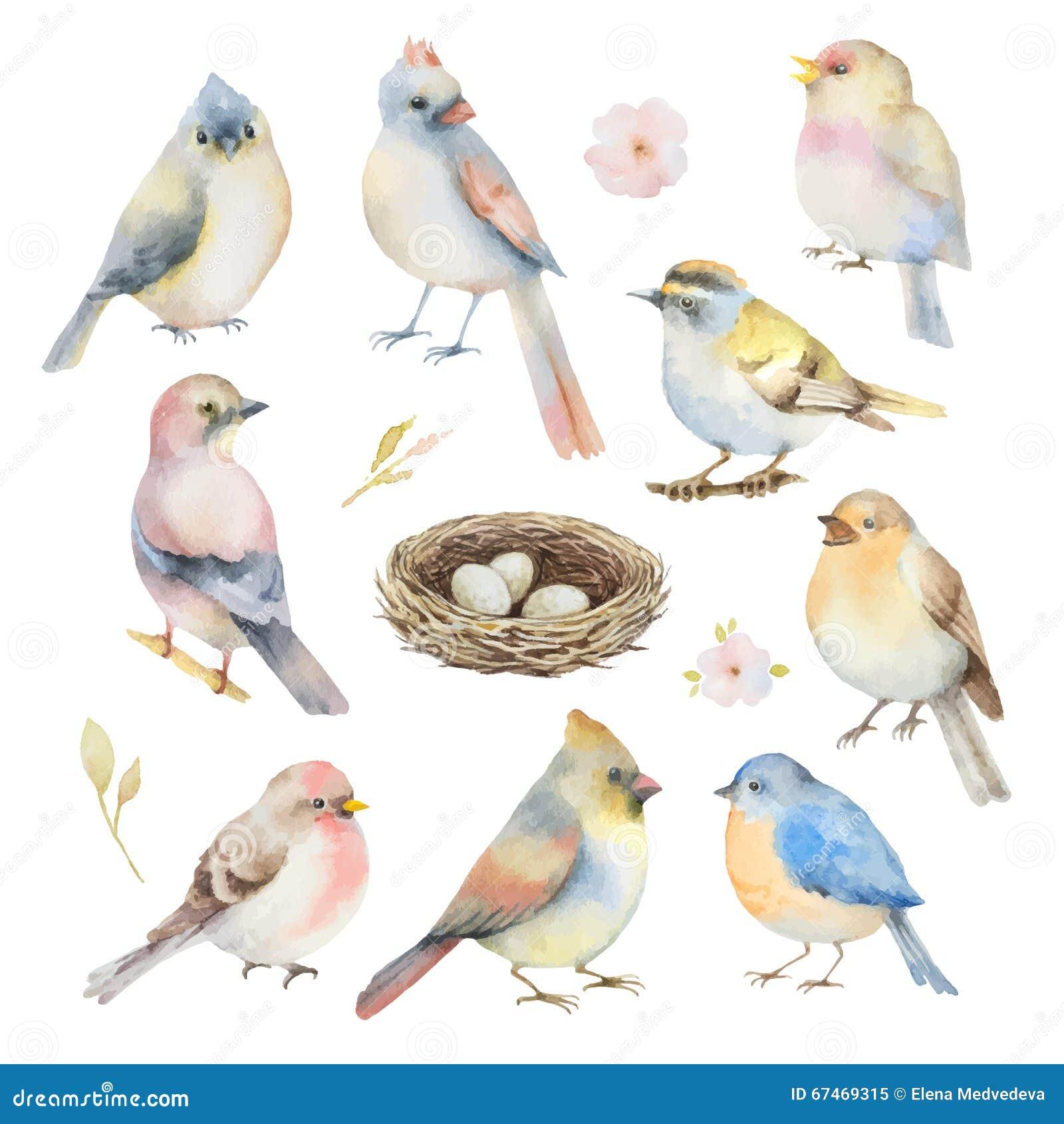 Sistema del vector de la acuarela de pájaros