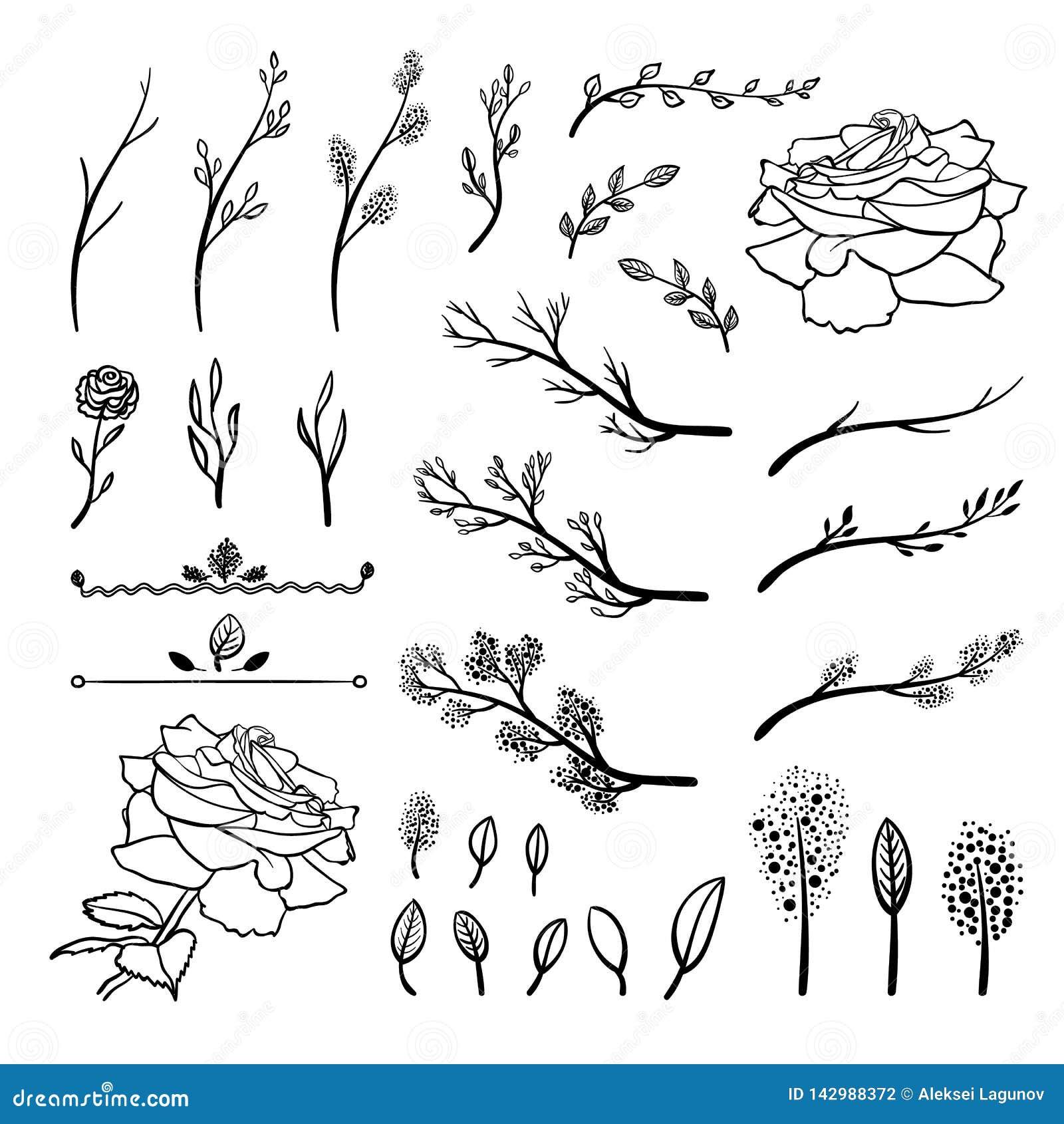 Sistema del vector de los elementos exhaustos de la mano, ramitas de la primavera, brotes, hojas, flores, dibujos negros, aislado