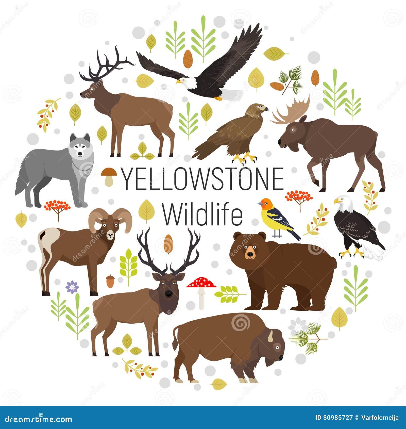Sistema del vector del círculo de plantas y de los animales de Yellowstone