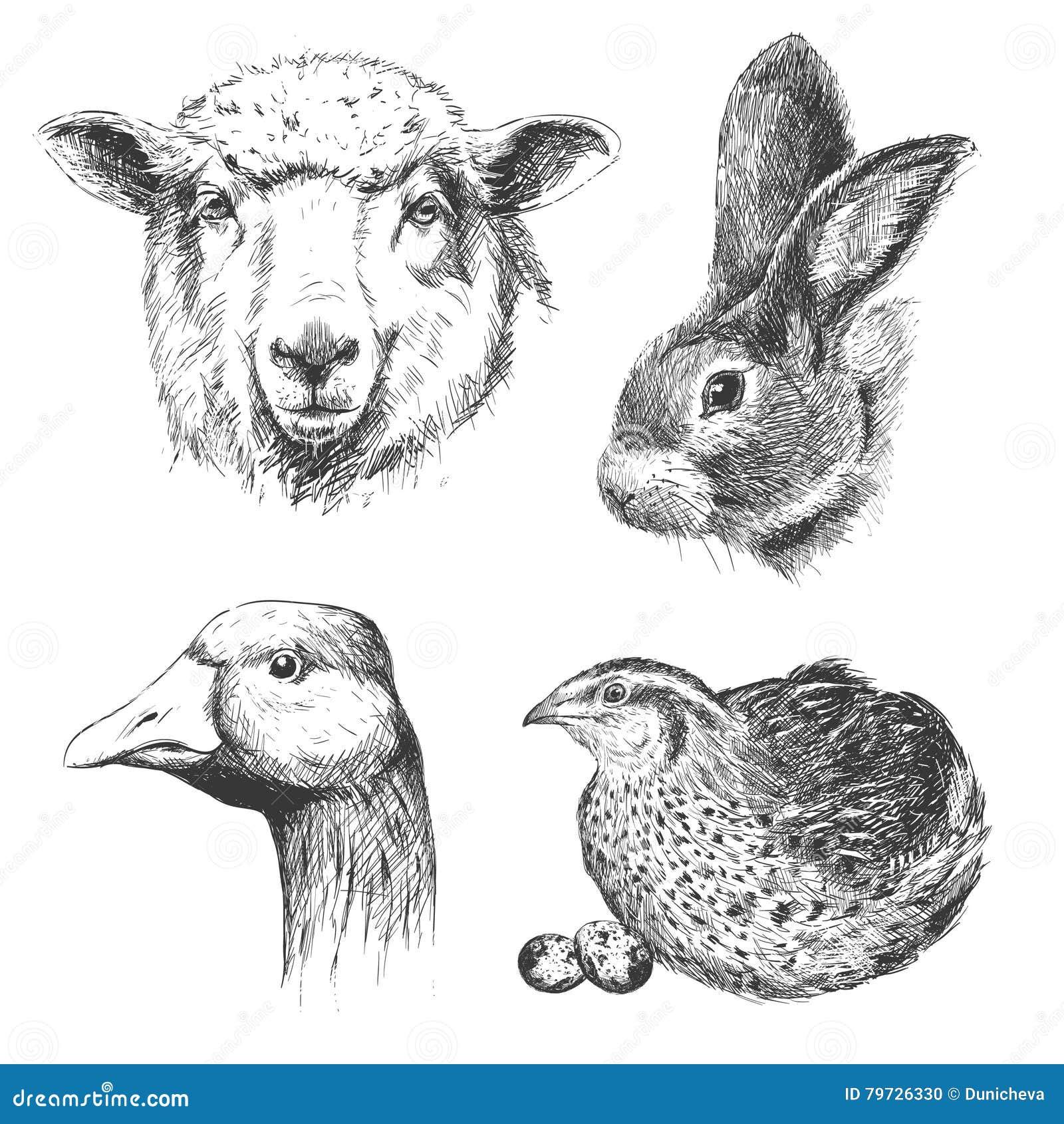 Sistema del vintage de los animales del campo, vector