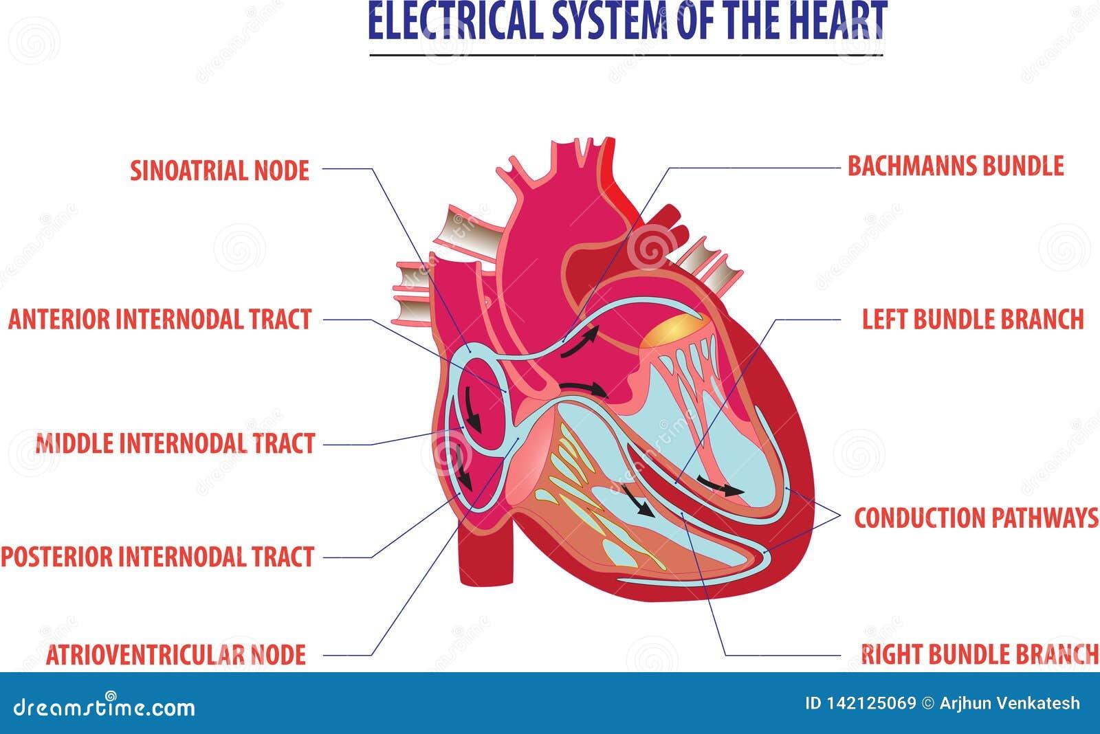 Sistema elettrico dell illustrazione del lavoro del cuore