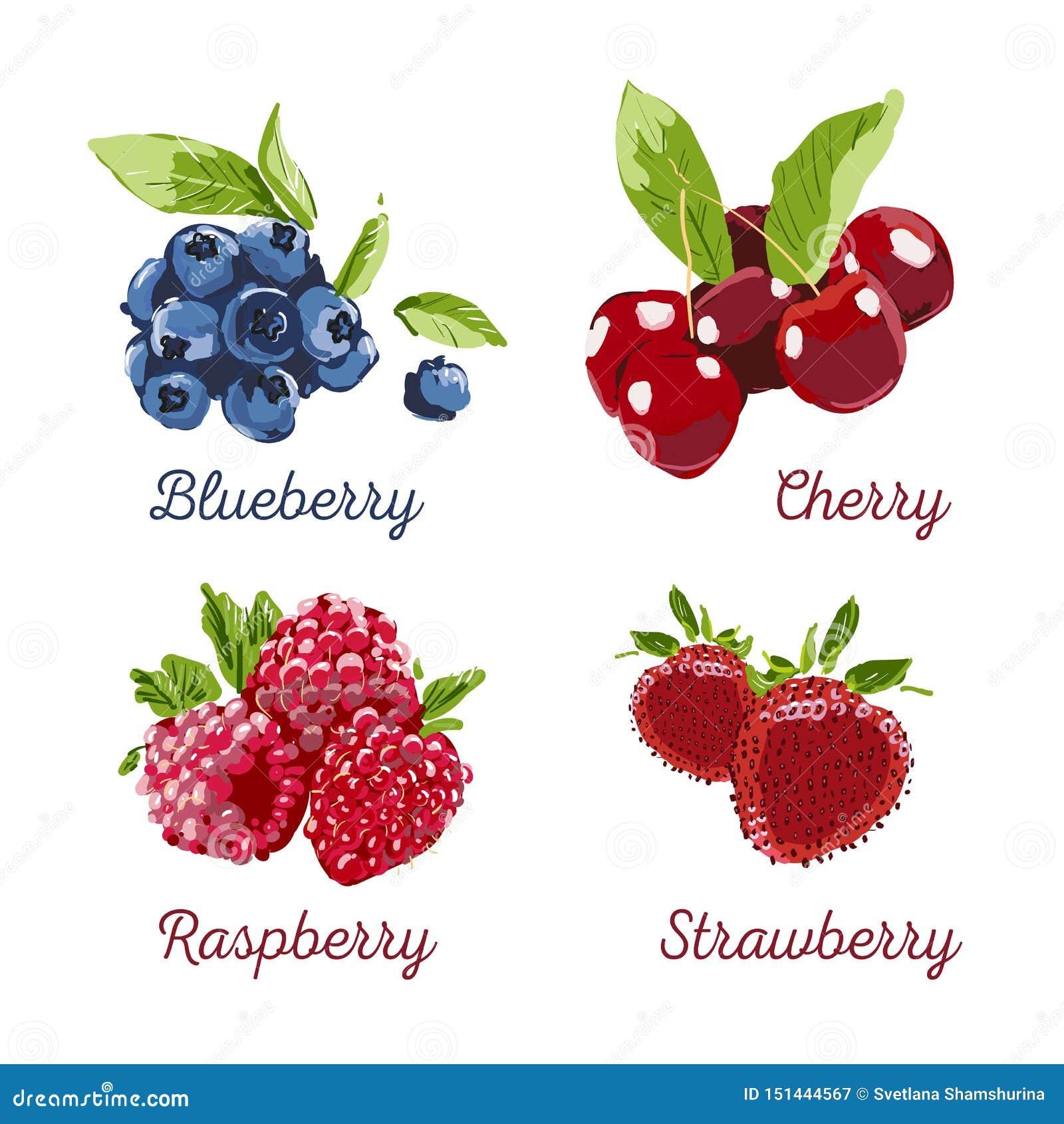 Sistema exhausto del vector de Berry Hand Ejemplo colorido del marcador de la baya Frambuesa, fresa, cereza, arándano en el fondo