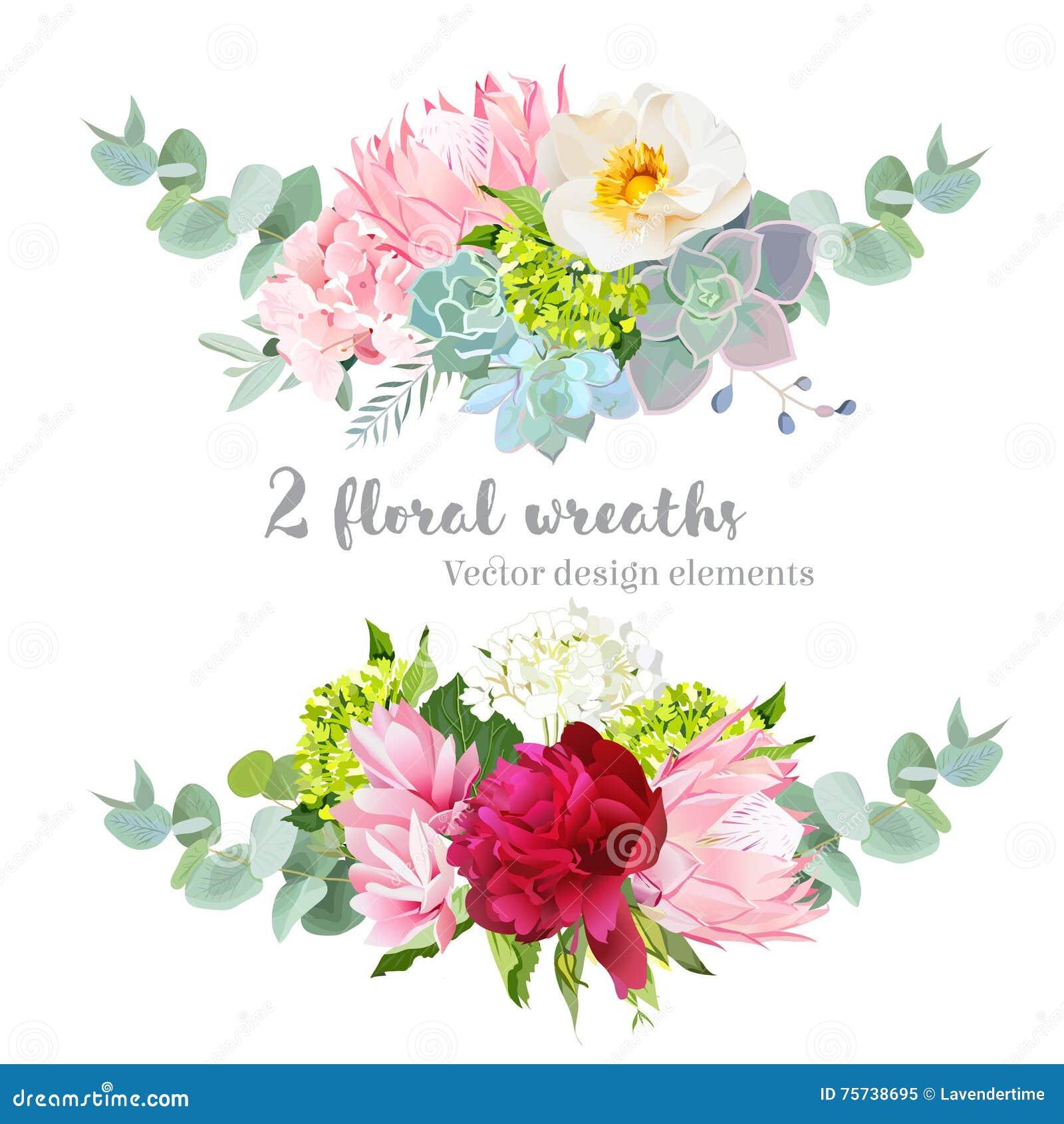 Sistema floral del diseño del vector de la guirnalda de la mezcla La hortensia verde, blanca y rosada, salvaje subió, protea, suc