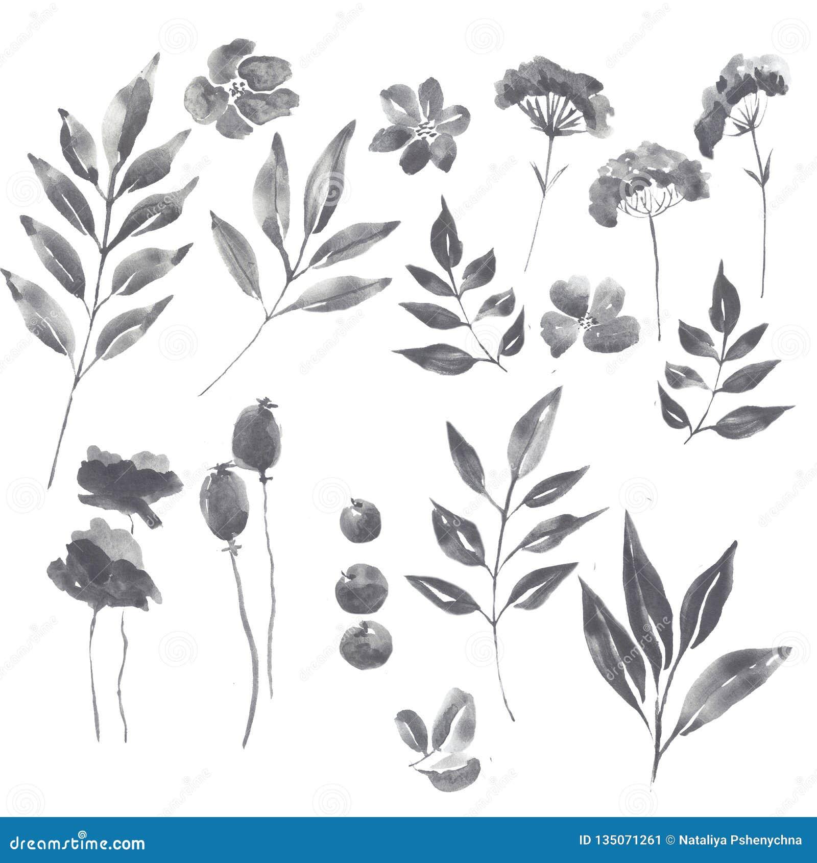 Sistema floral del grafito de la acuarela