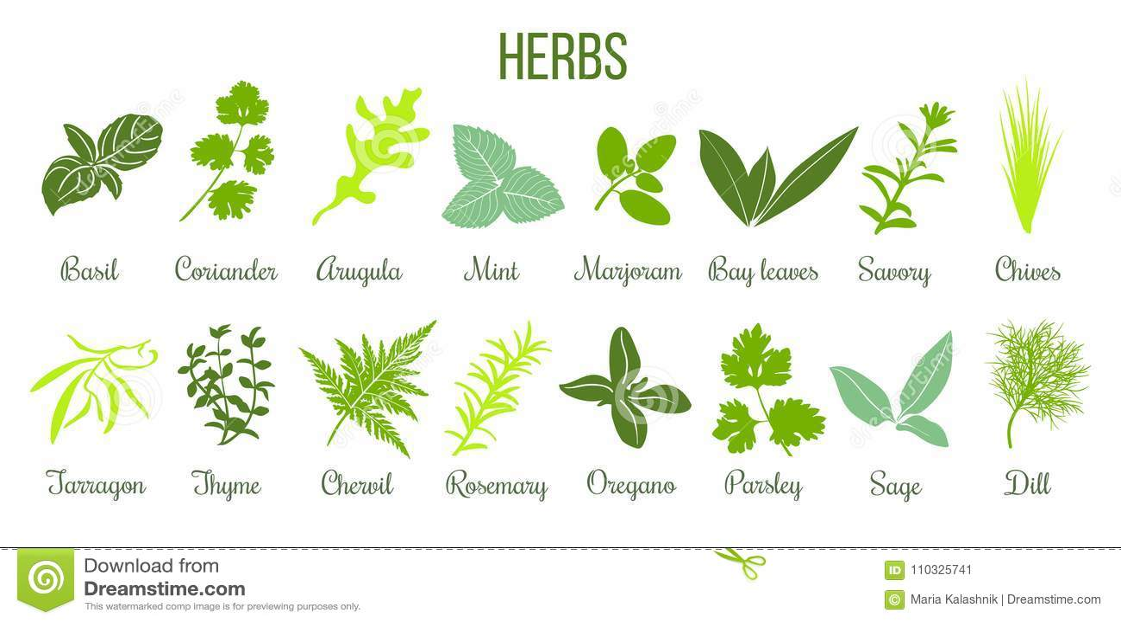 Sistema grande del icono de hierbas culinarias planas sabio, tomillo, romero, albahaca