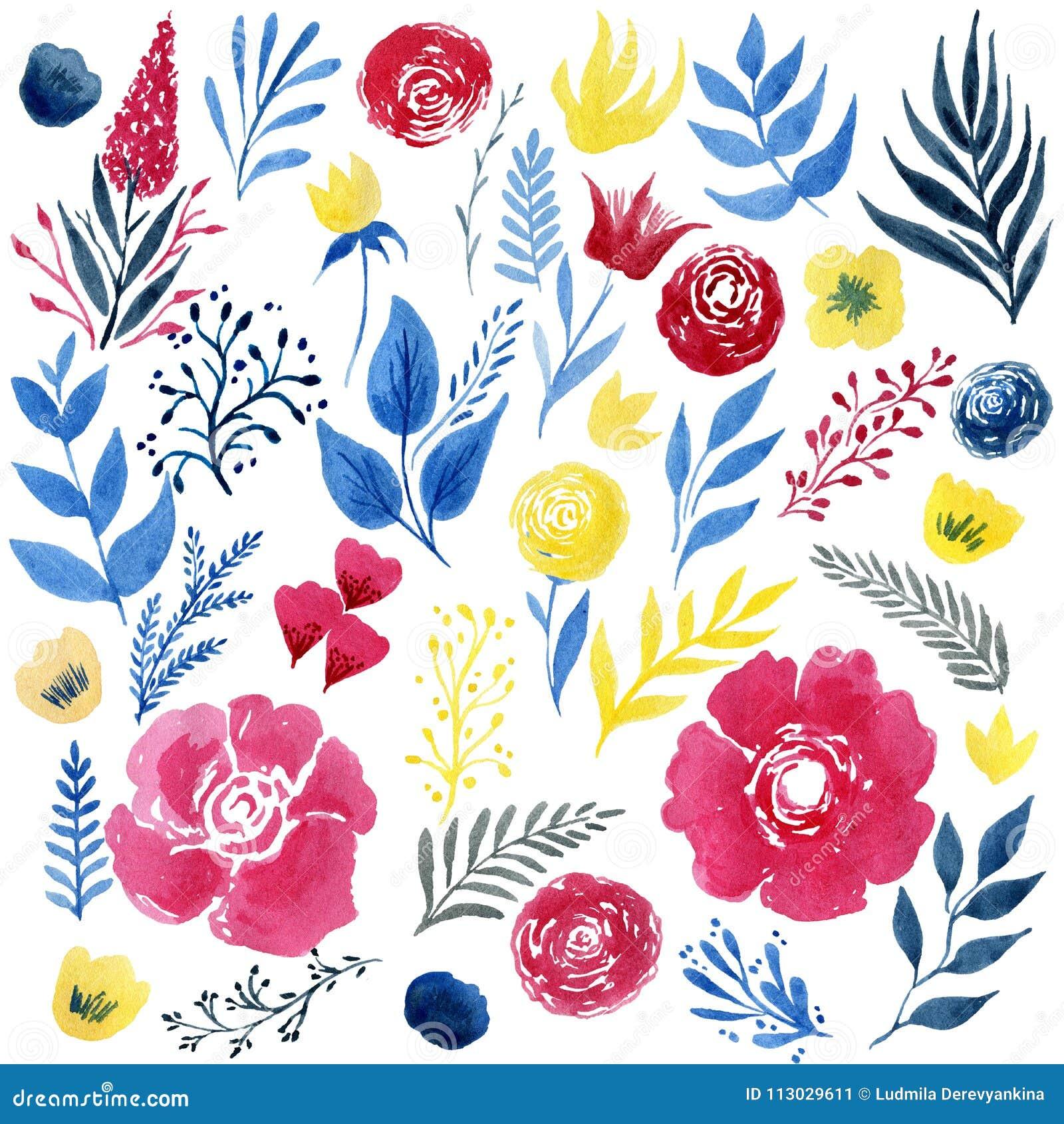 Sistema hermoso de la flor de la acuarela sobre el fondo blanco para el diseño
