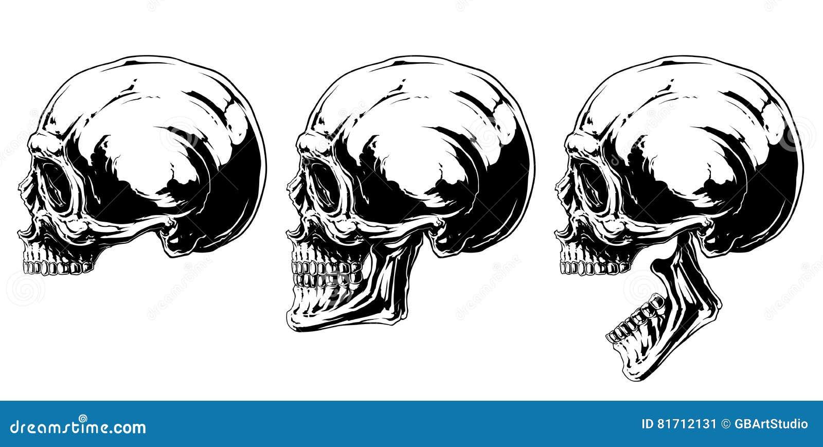 Sistema Humano Blanco Y Negro Gráfico De La Proyección Del Cráneo ...