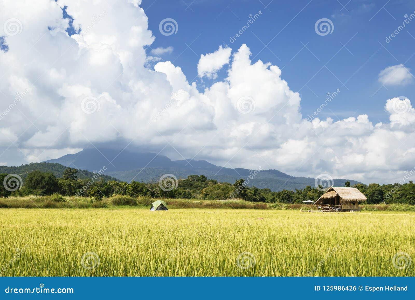 Sistemi in Tailandia con costruzione di bambù ed il grande cielo