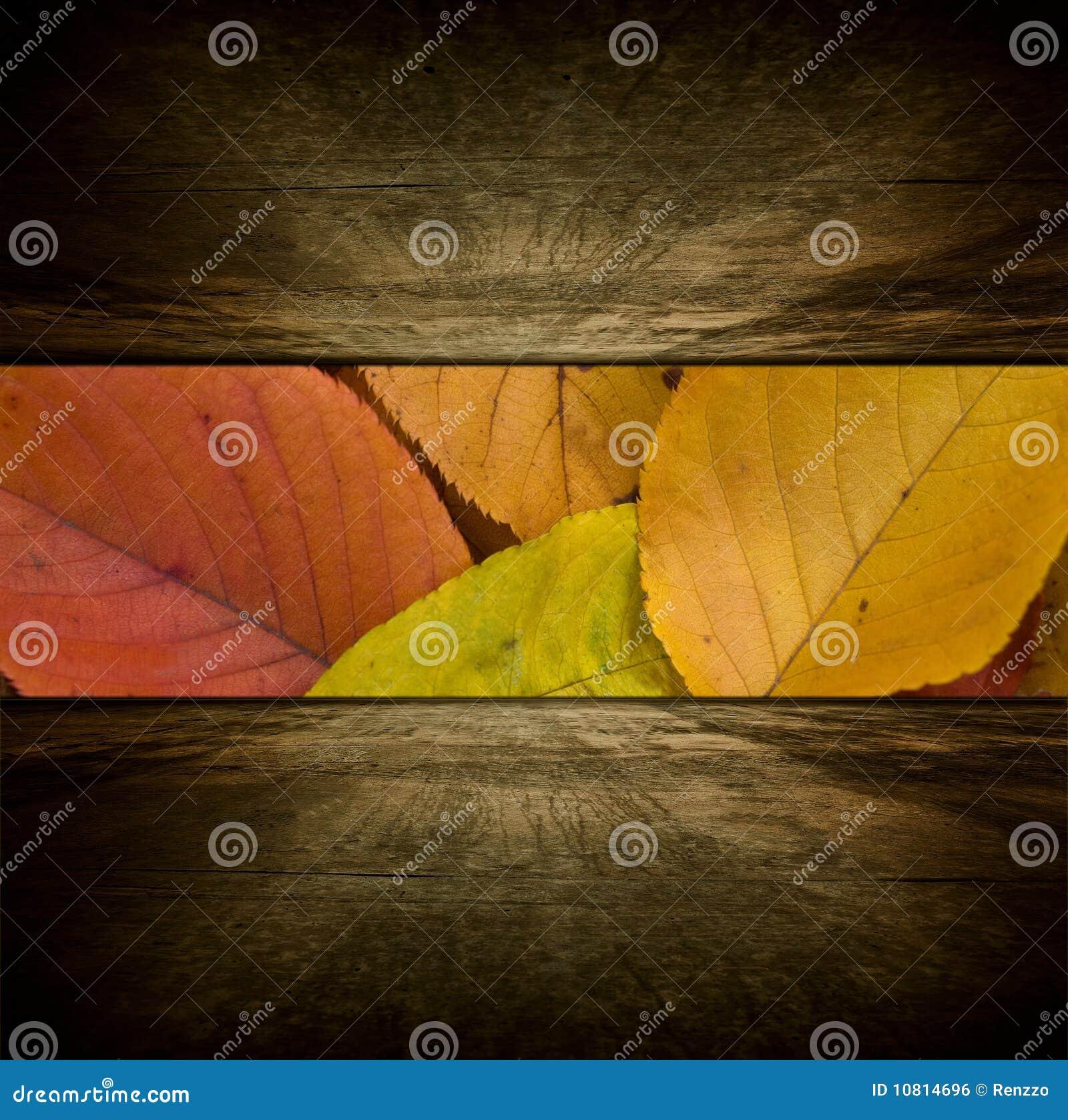 Sitio del otoño