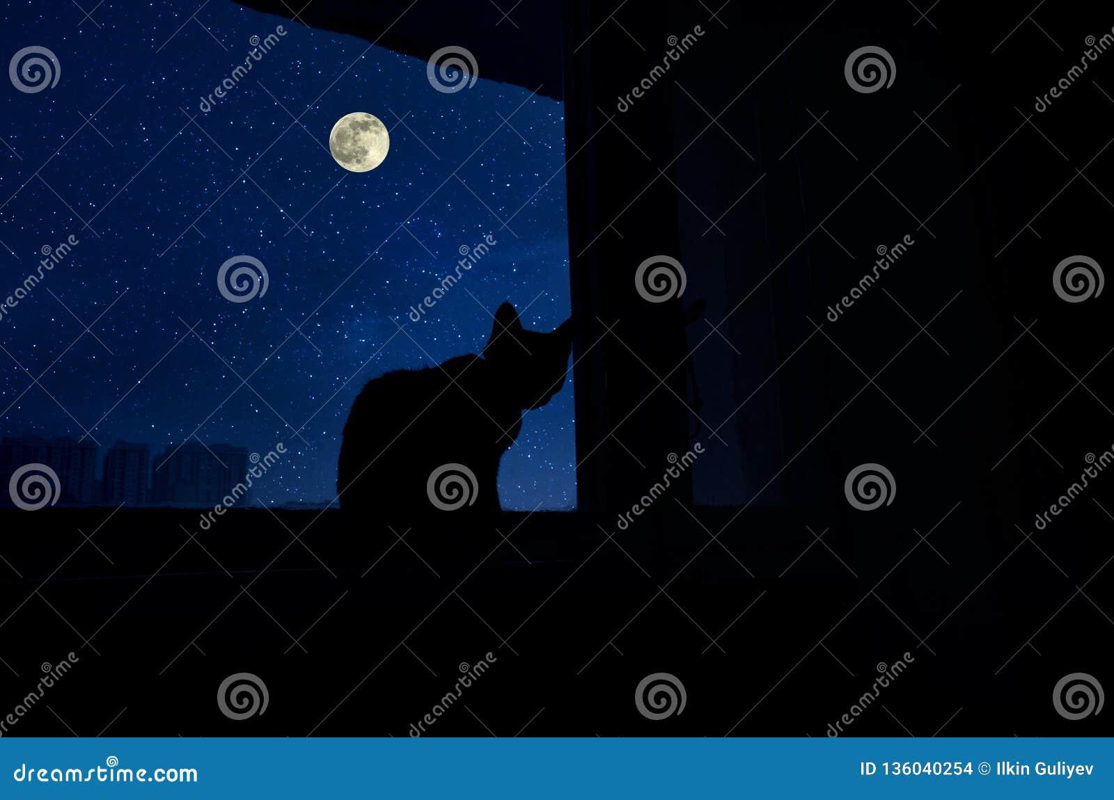 Sitio oscuro en la silueta de un gato que se sienta en una ventana en la noche