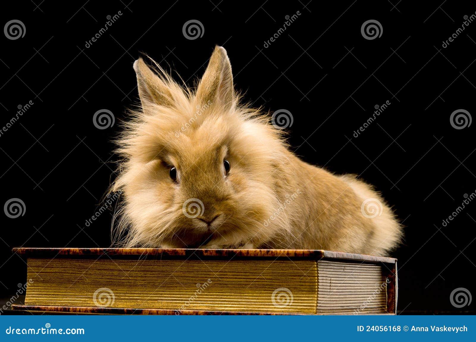Sitta för kanin för bok som brunt fluffigt är litet