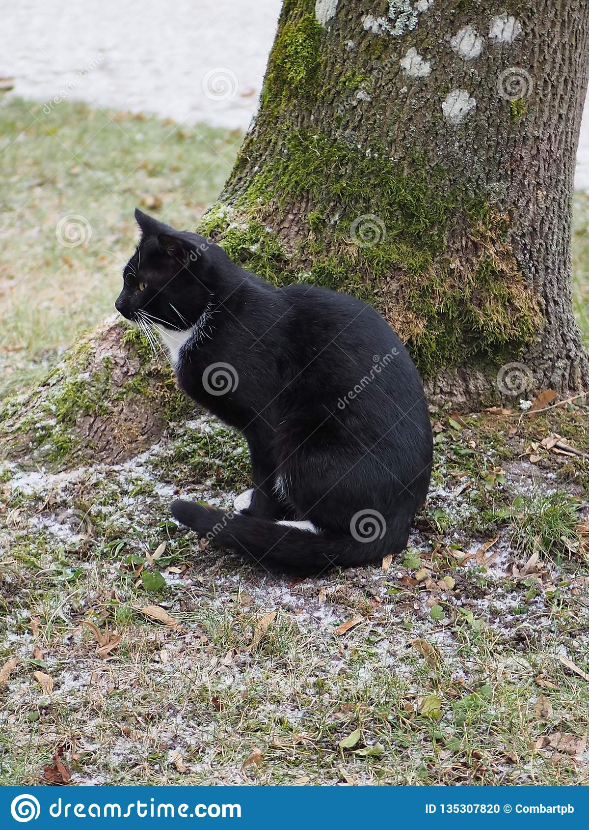Sitting black cat next to a tree in cold day