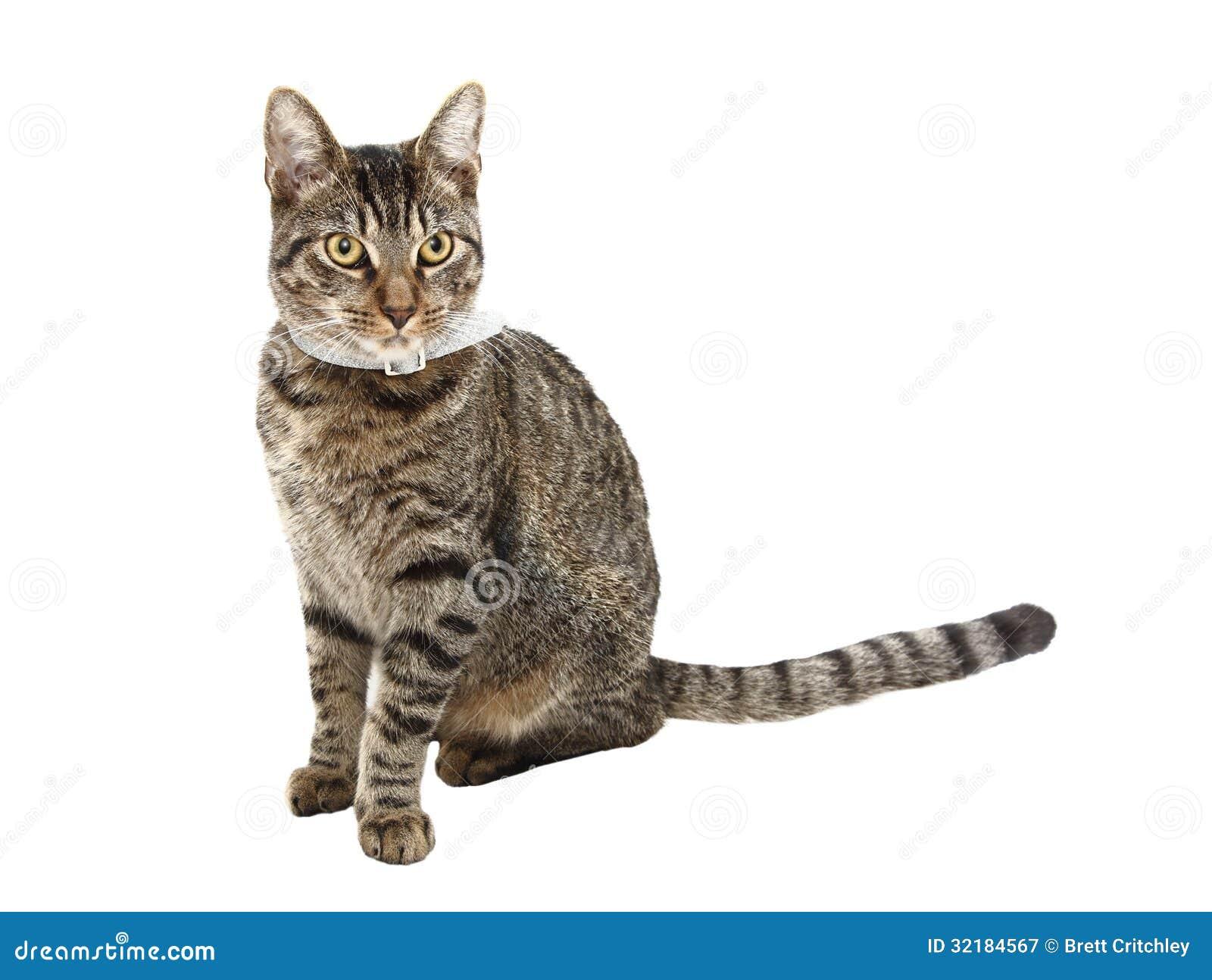 Cat Photo Against White Background