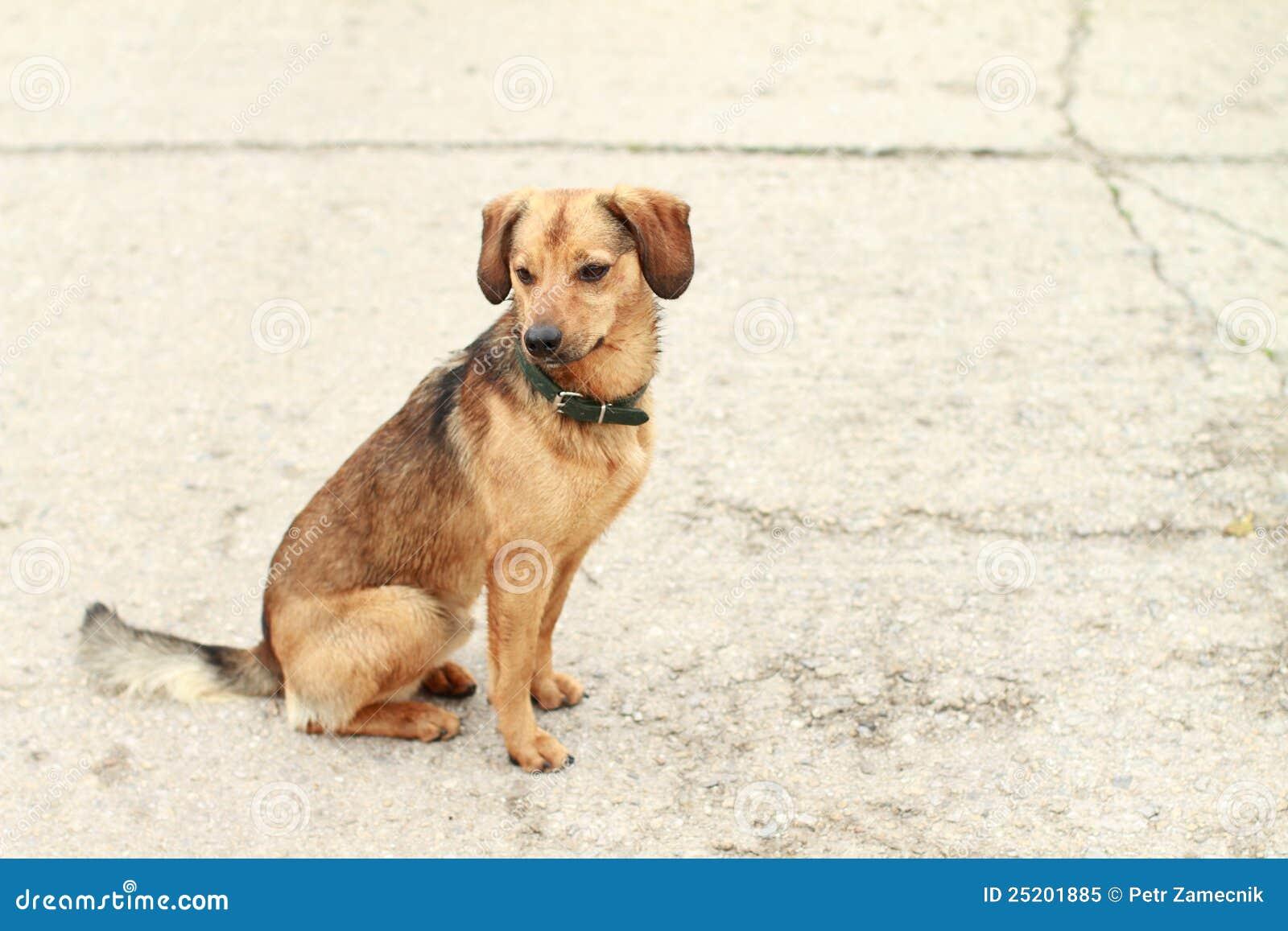 Sitting dog stock image. Image of sitting, wait, mammal ...