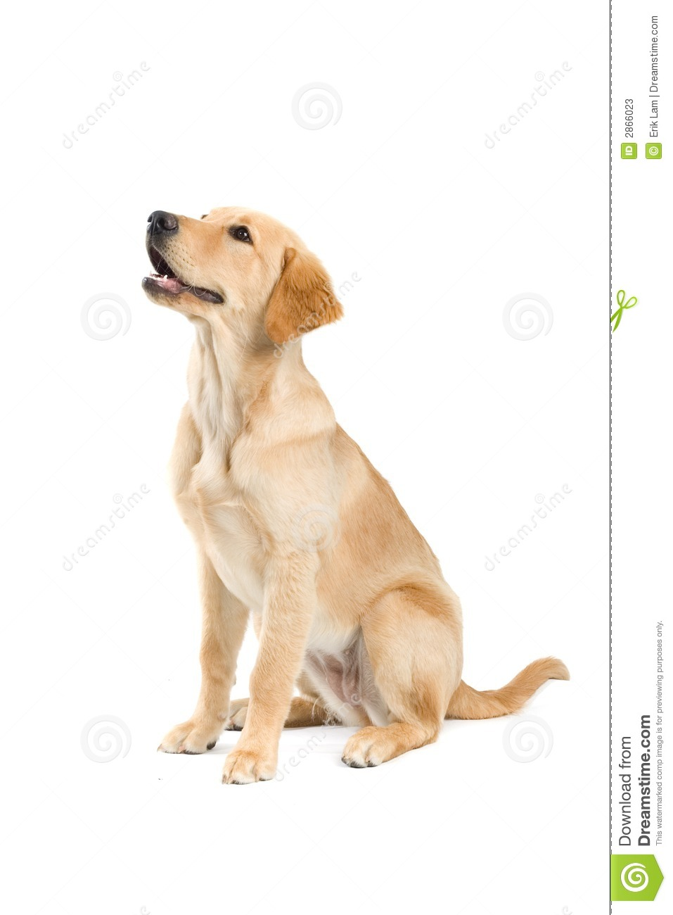 Sitting dog stock photos image 2866023 for Be a dog sitter