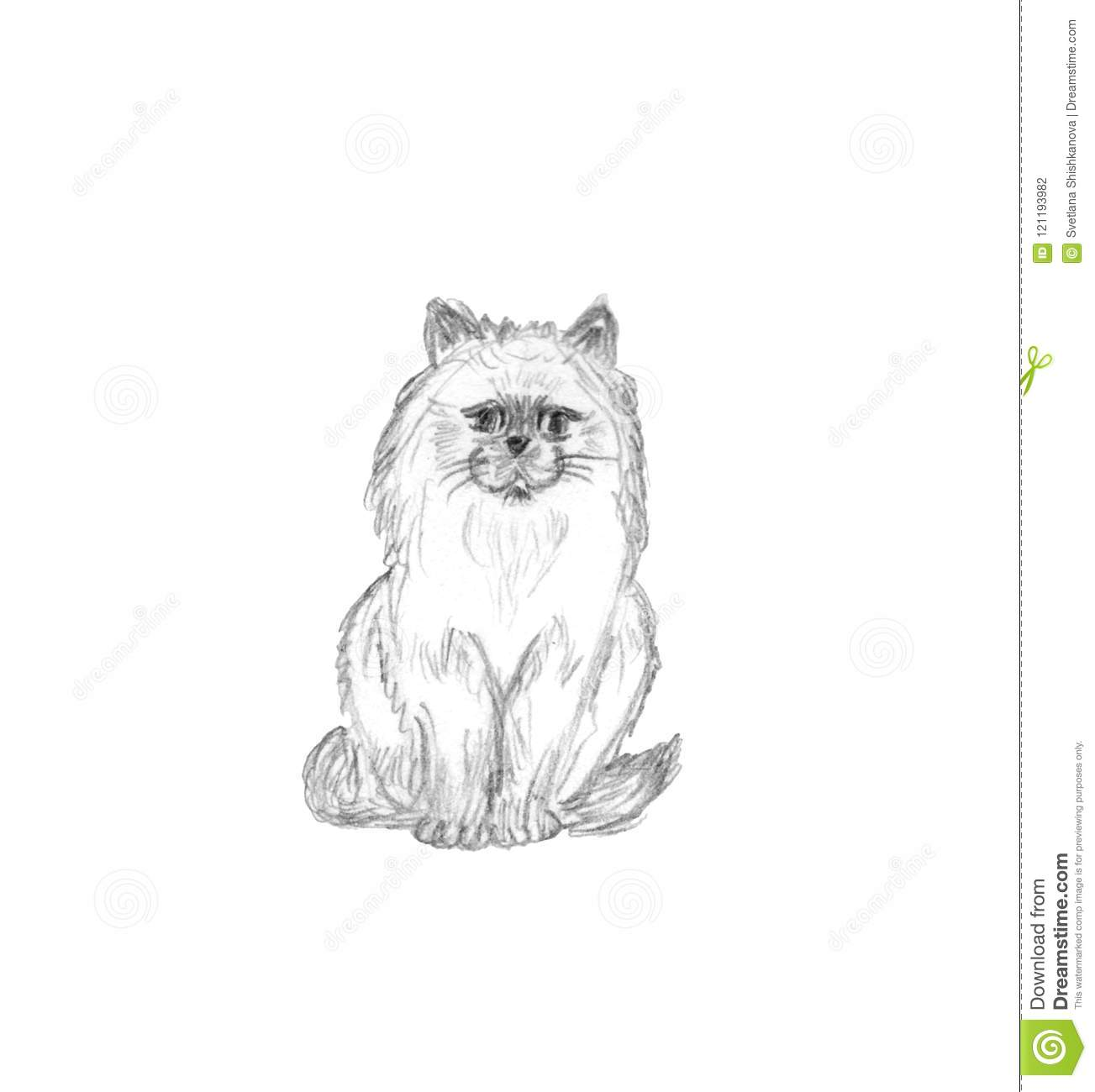 Sitting fluffy cat isolated on white background pencil sketch
