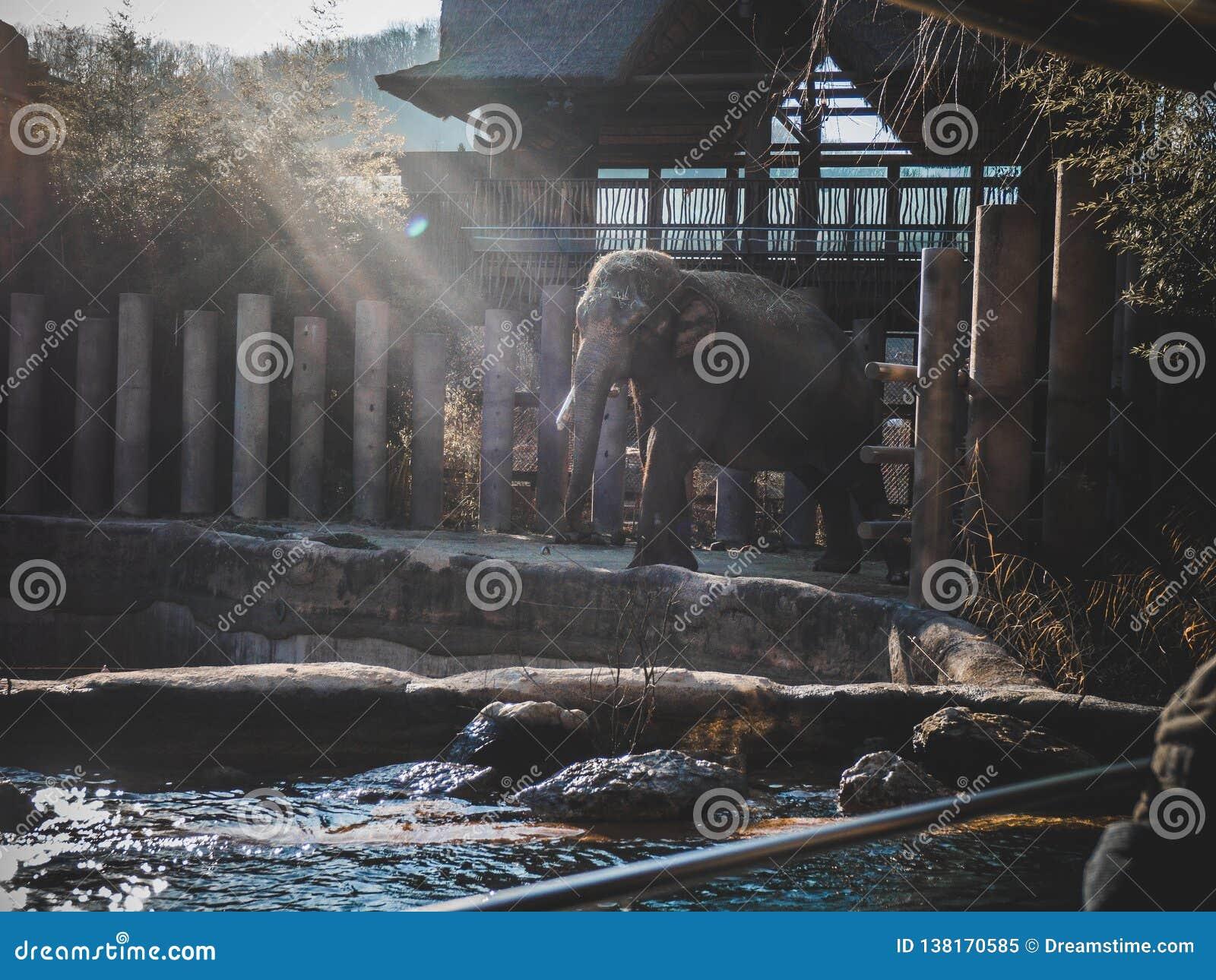 Situación del elefante en un día soleado brillante