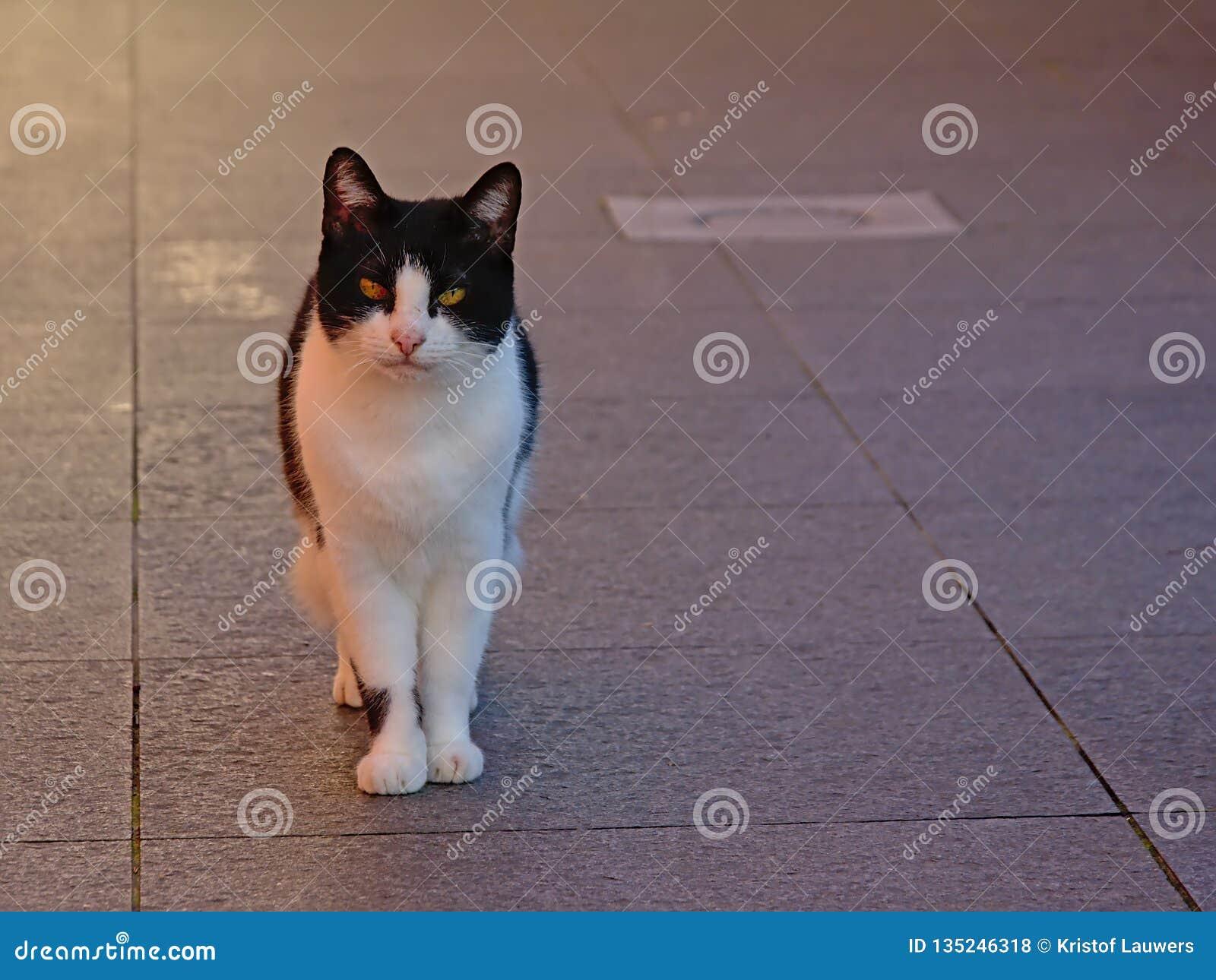 Situación linda del gato en un terace