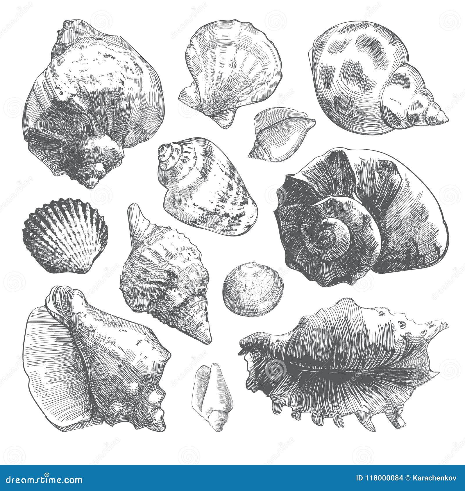 Siwieje doodle seashell sylwetki odizolowywać na bielu