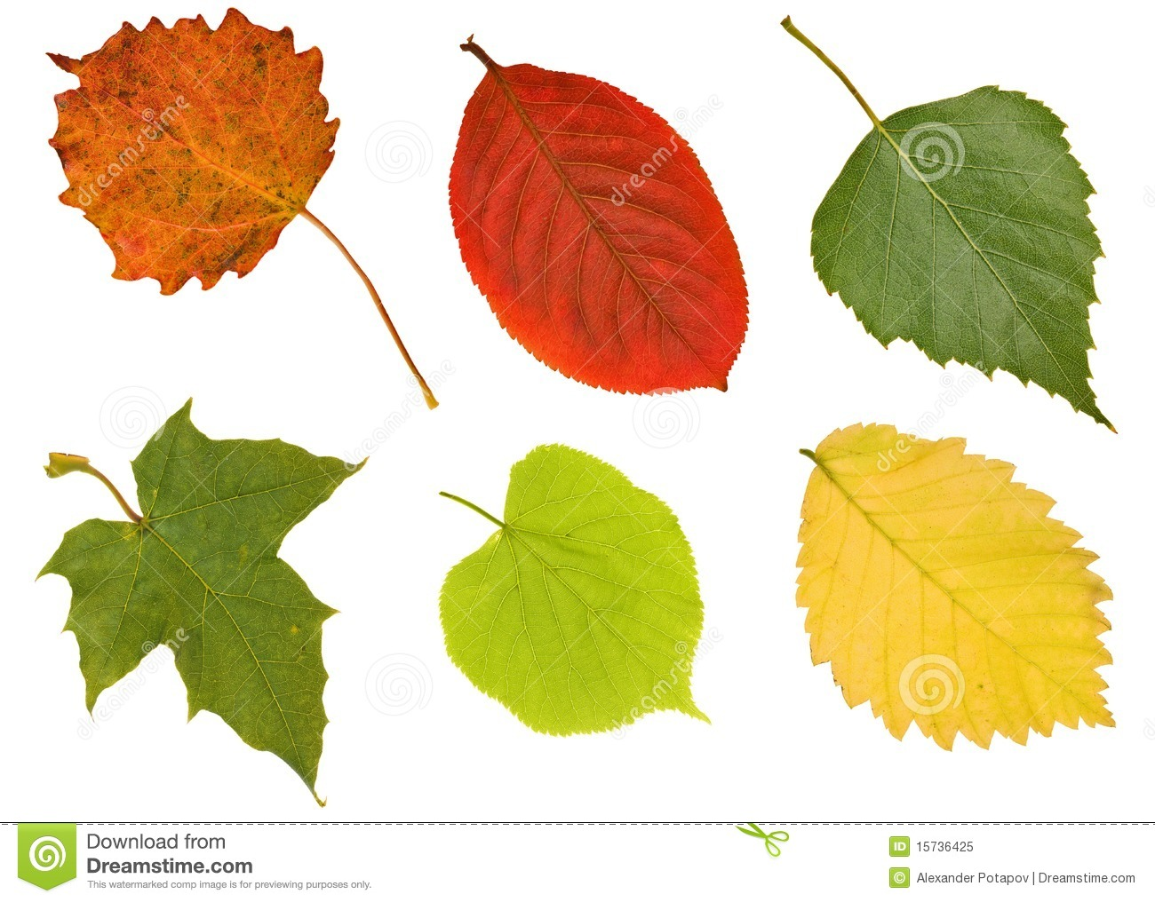 Six Different Leaves On White Royalty Free Stock Photo - Image ...