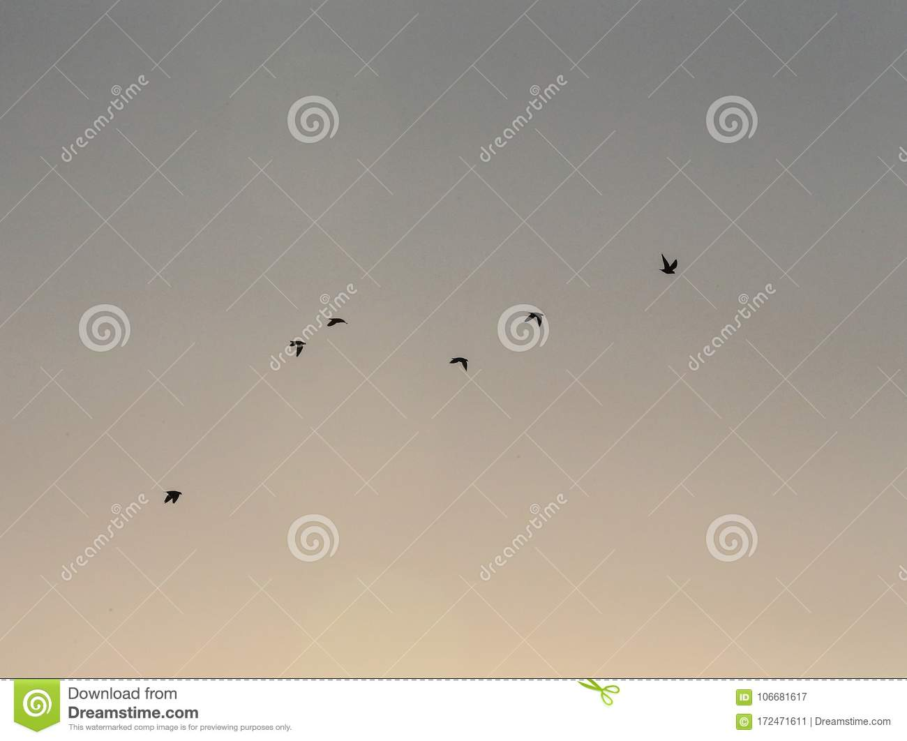 A group of dove flew across the sky