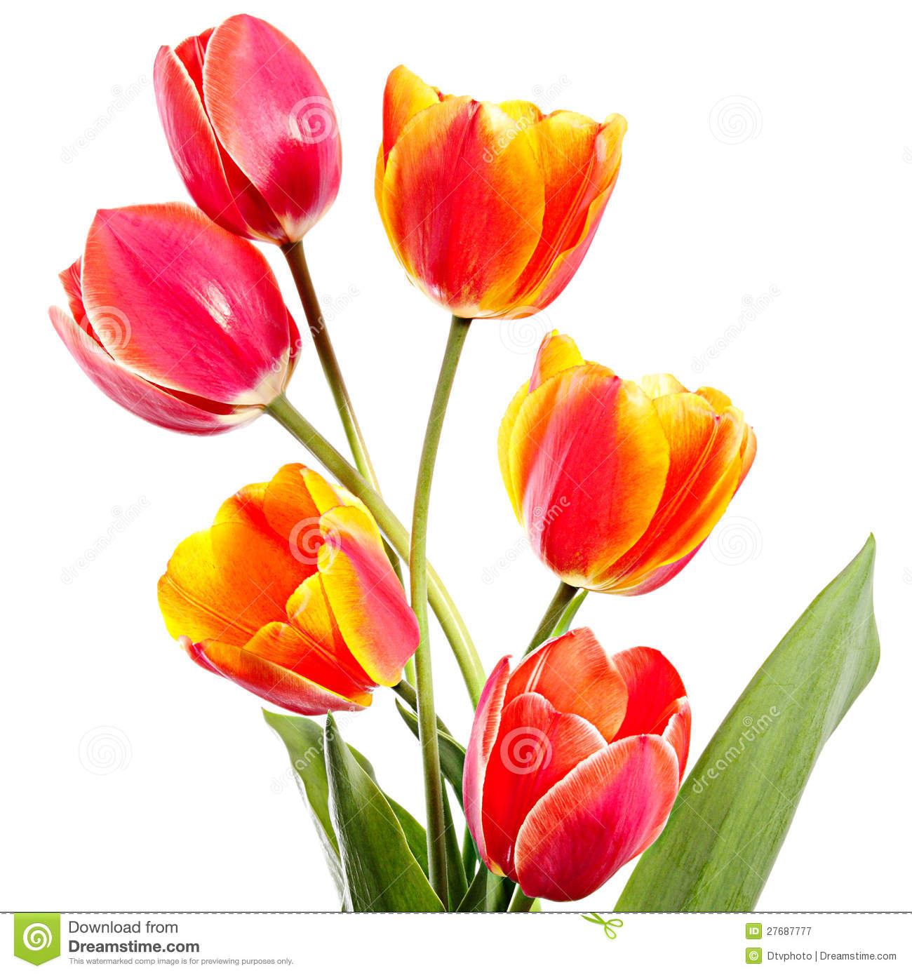 Six Flowers Royalty Free Stock Photography Image 27687777