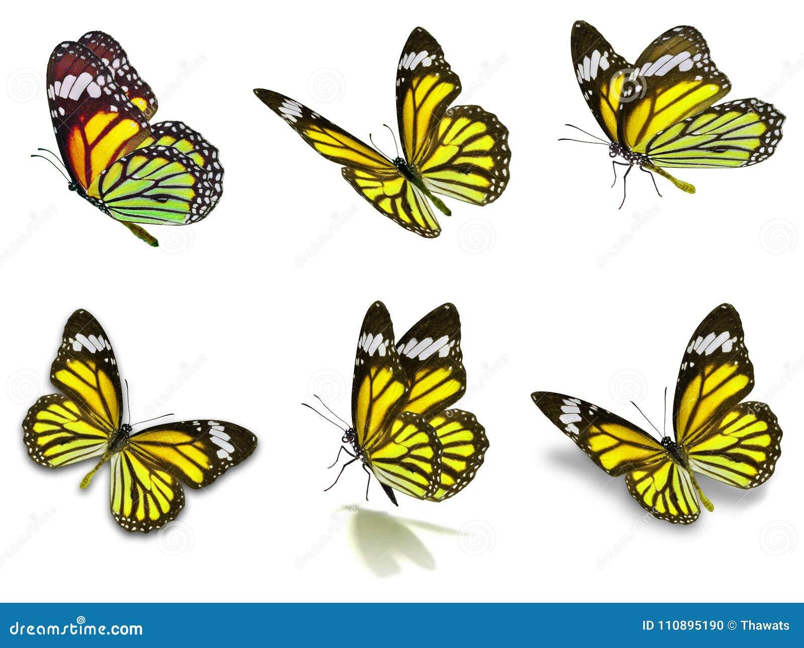 Six monarch butterflies set