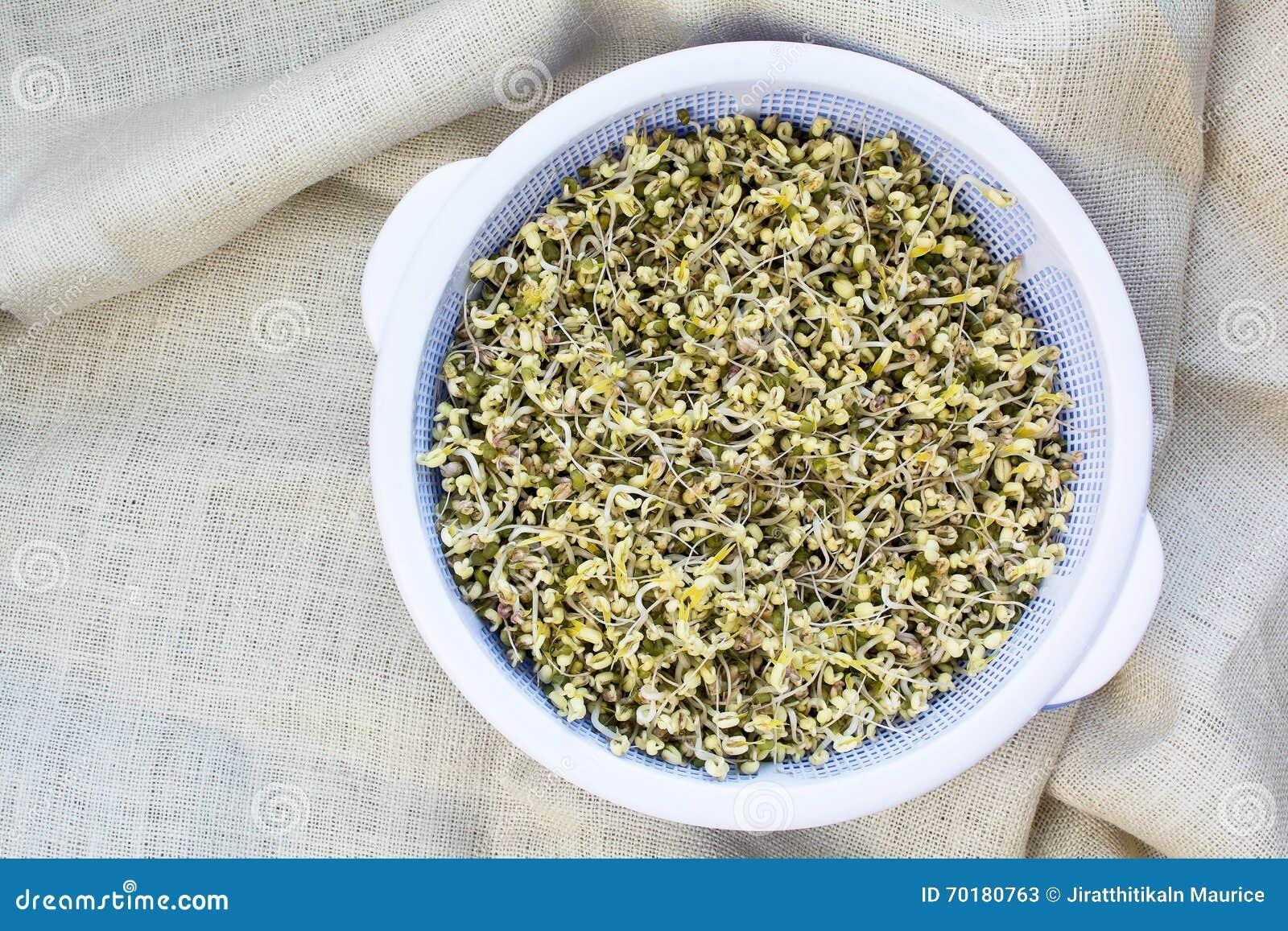 Självodlade organiska beansprouts