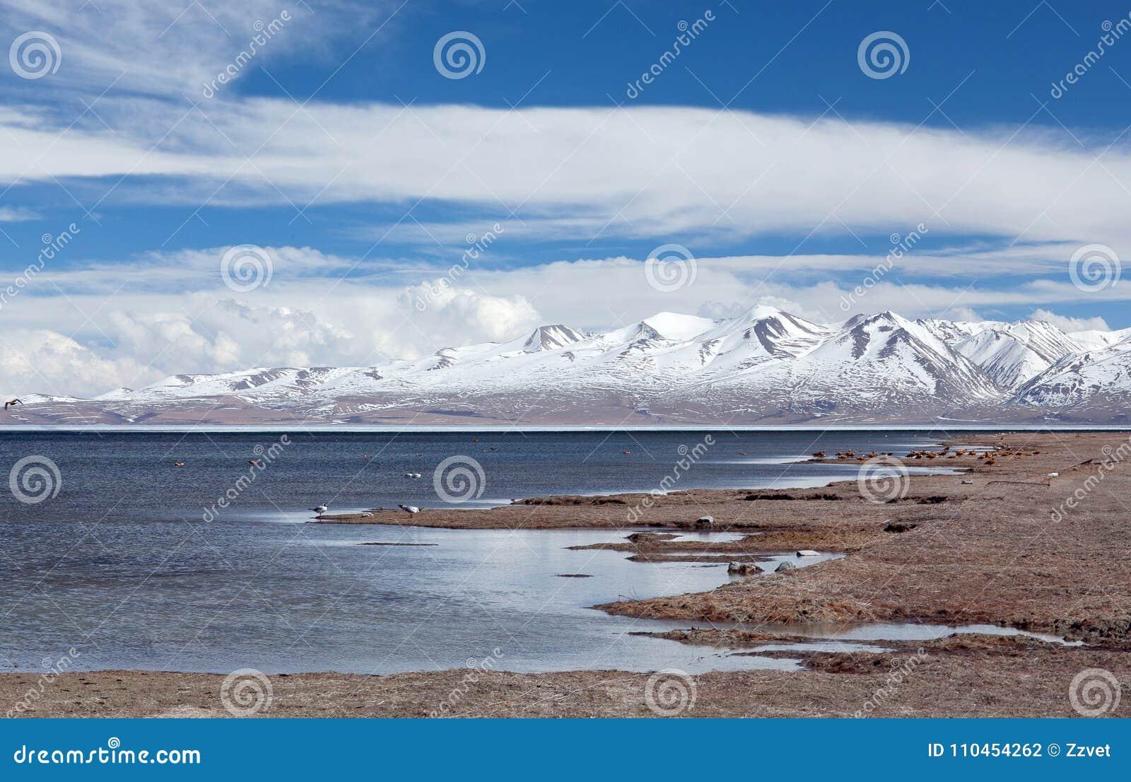 Sjö Manasarovar i västra Tibet, Kina