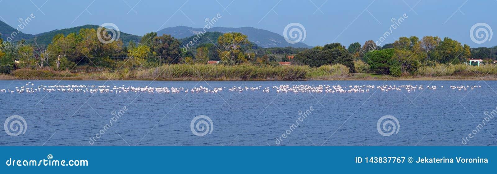Sjön Korission är ett mycket viktigt ekosystem av Korfu, var många flyttfåglar som rosa flamingo stoppar