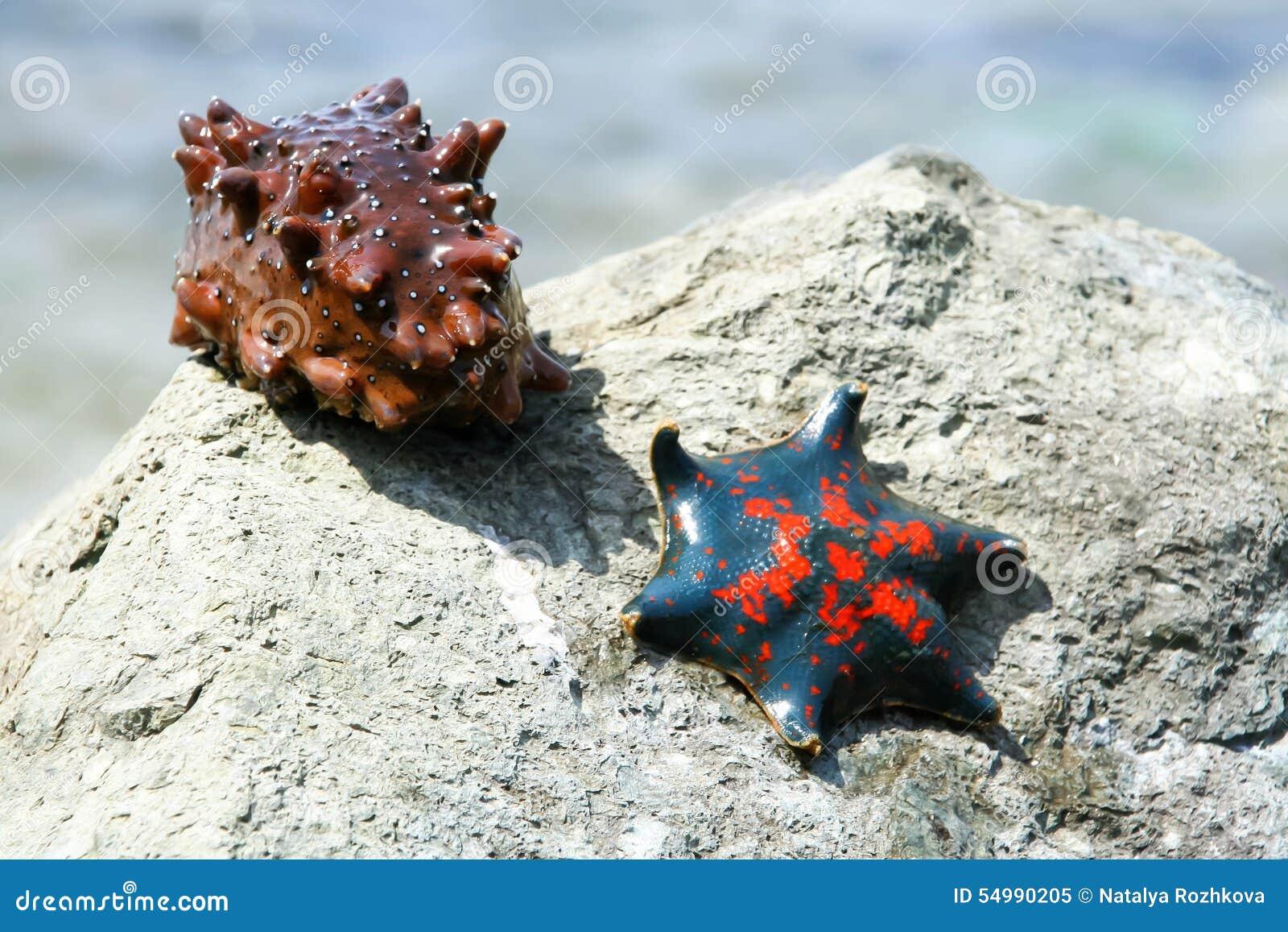 Sjöstjärna och en havsgurka på kusten