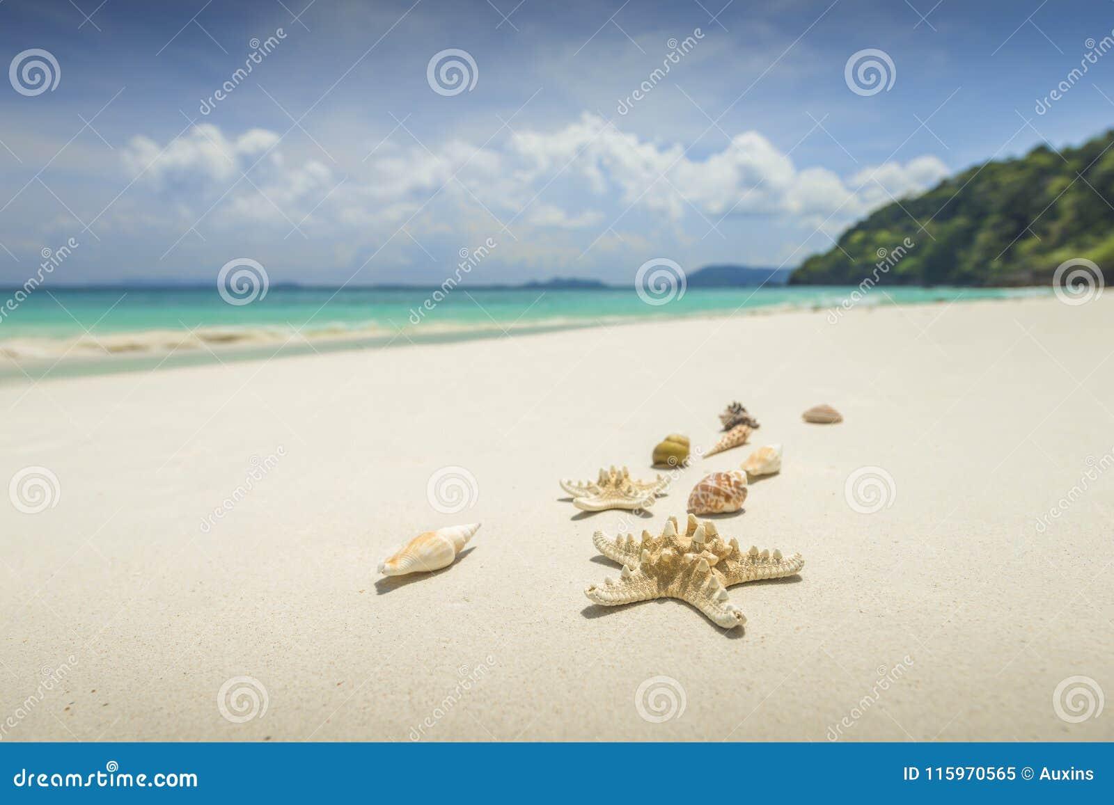 Sjöstjärna och skal på härlig tropisk strandbakgrund med