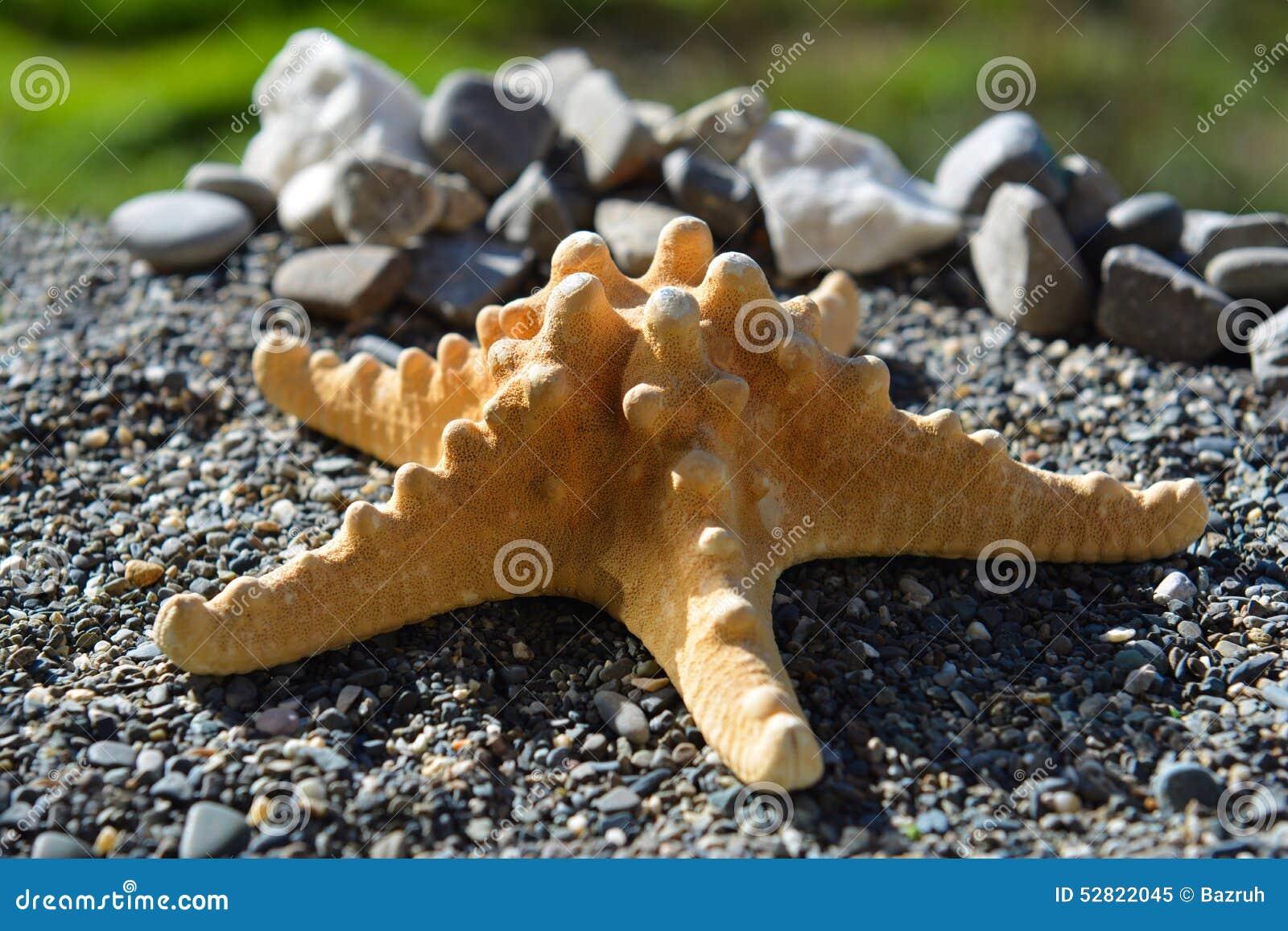 Sjöstjärna på sand på kusten