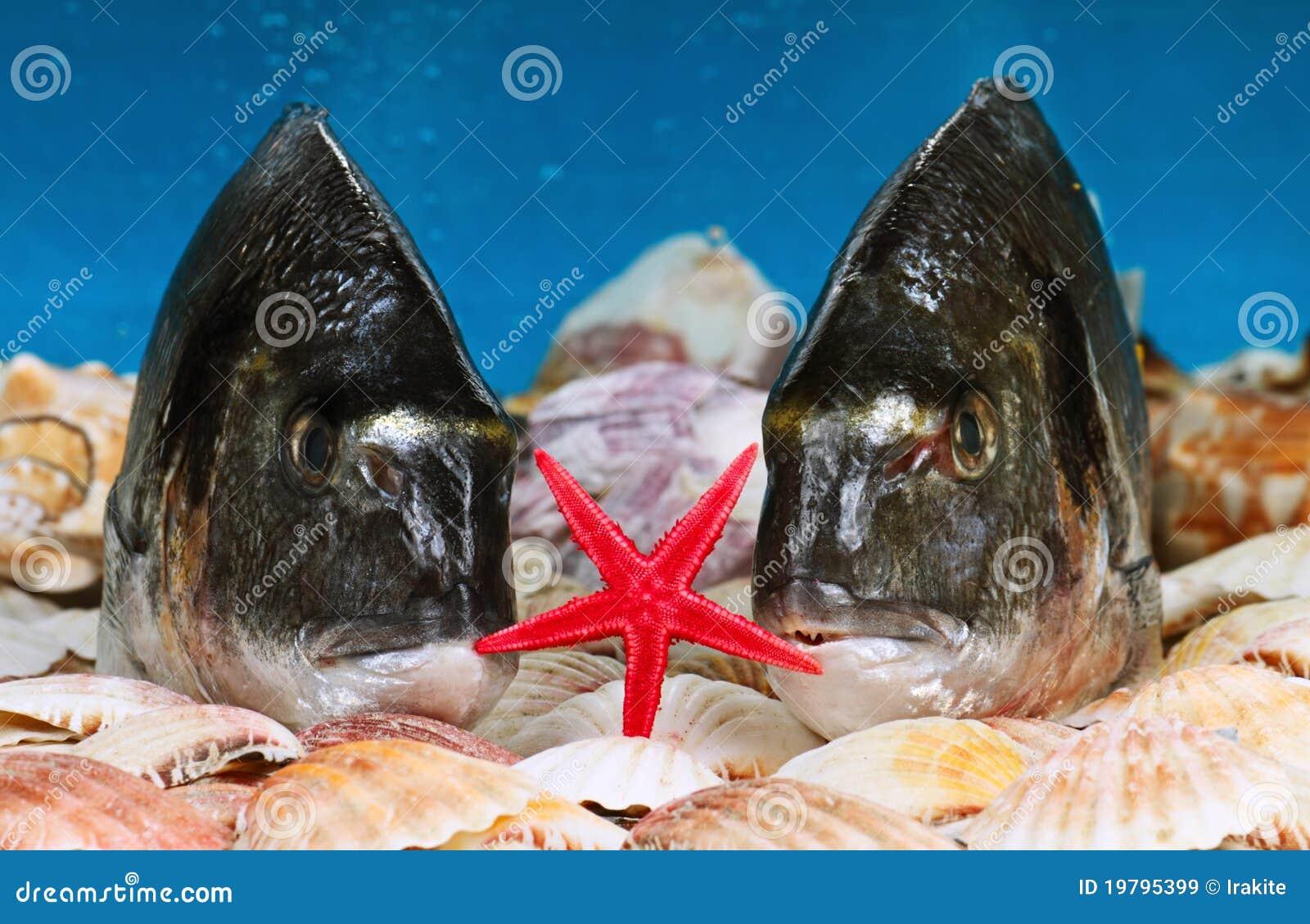 Sjöstjärna två för breamsgilthuvud