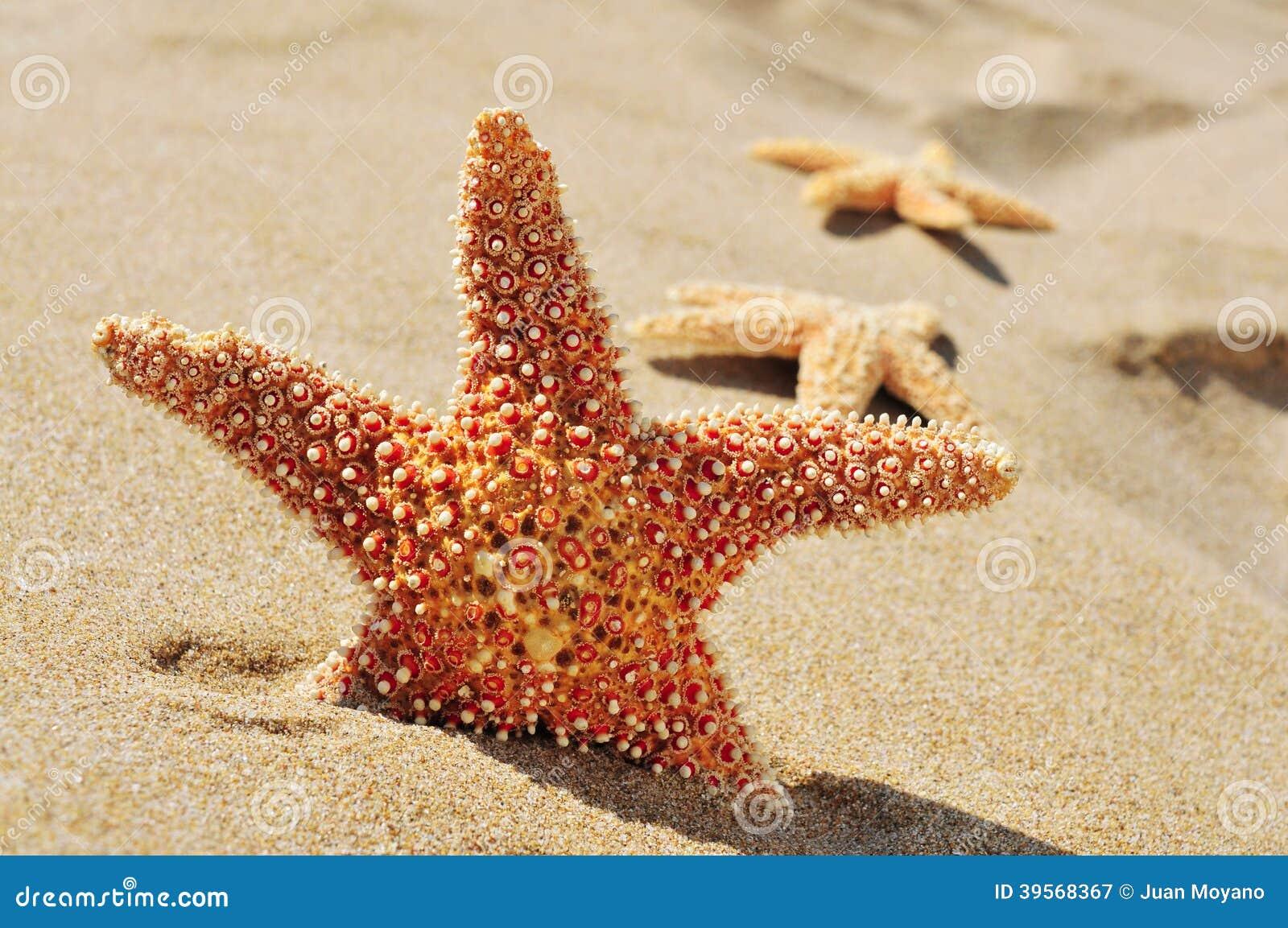 Sjöstjärnor på sanden av en strand