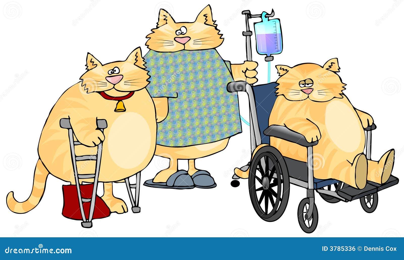 Sjuka katter