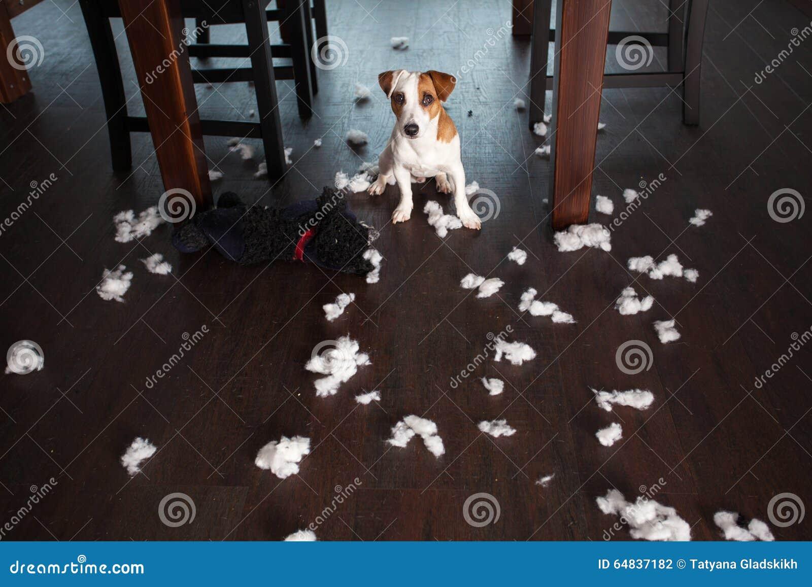 Skämma bort hundkapplöpning