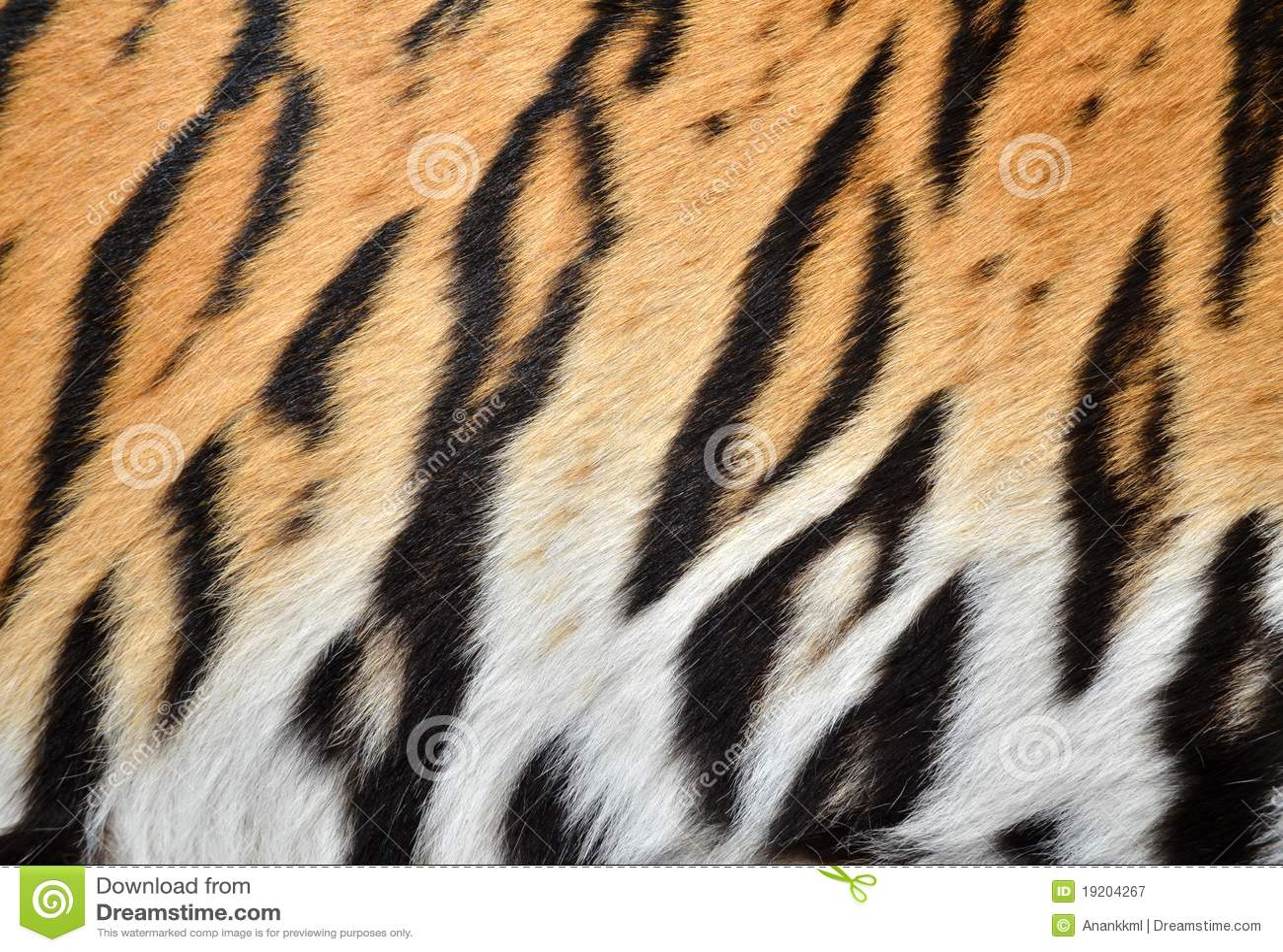 Skóra tygrys