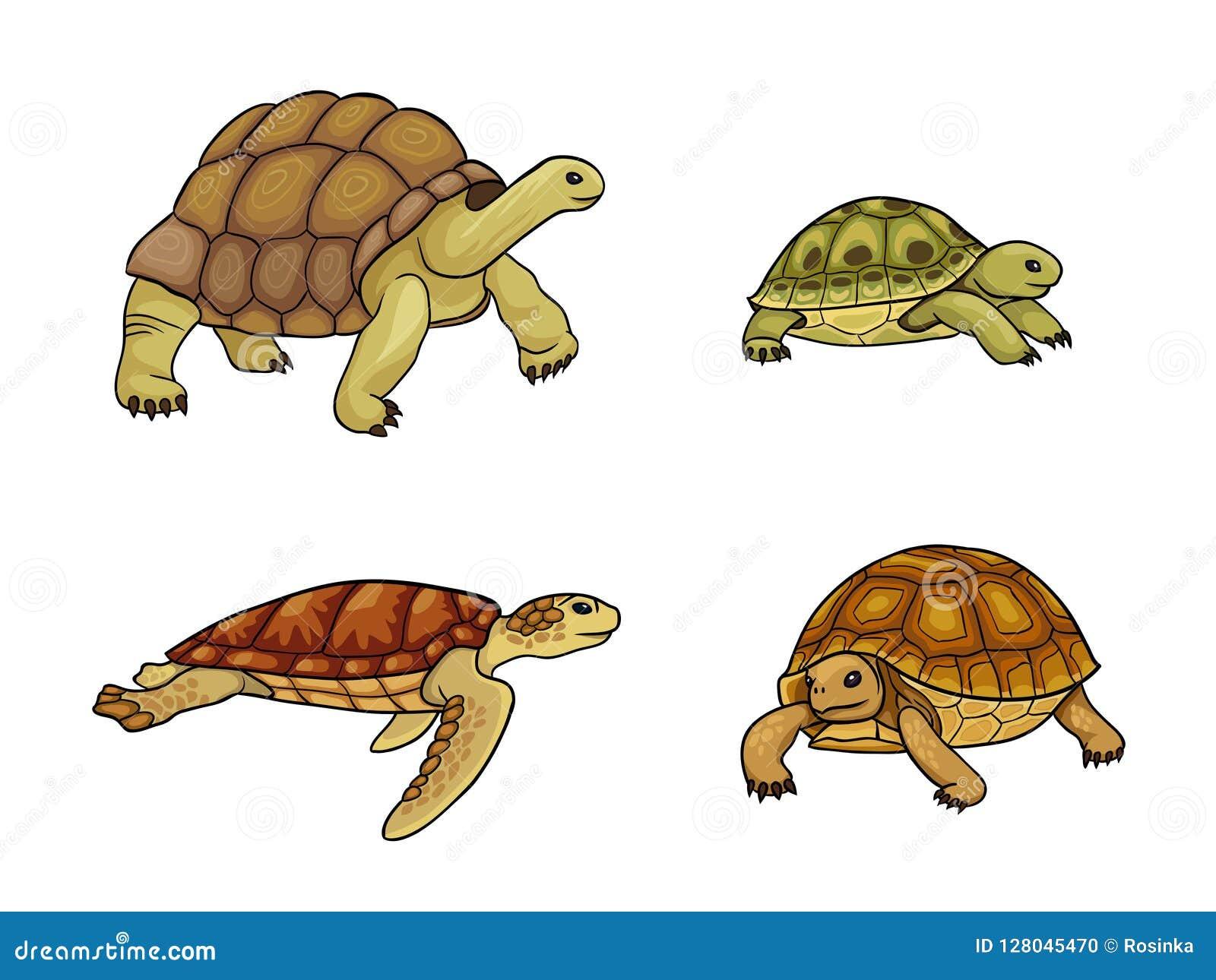 Sköldpadda och sköldpadda - vektorillustration