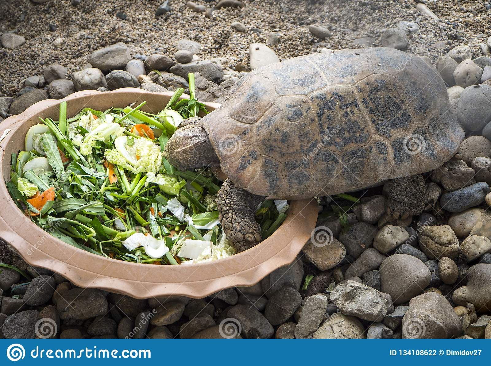 Sköldpadda som äter grönsaker från a