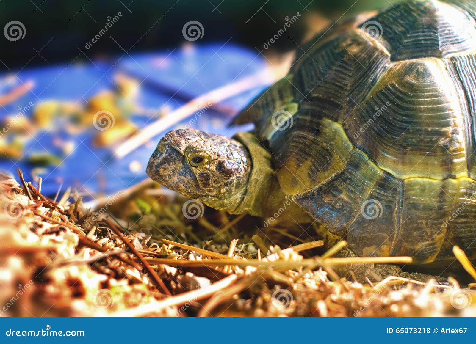 Sköldpaddan i ett akvarium klibbade hennes huvud ut ur skalet