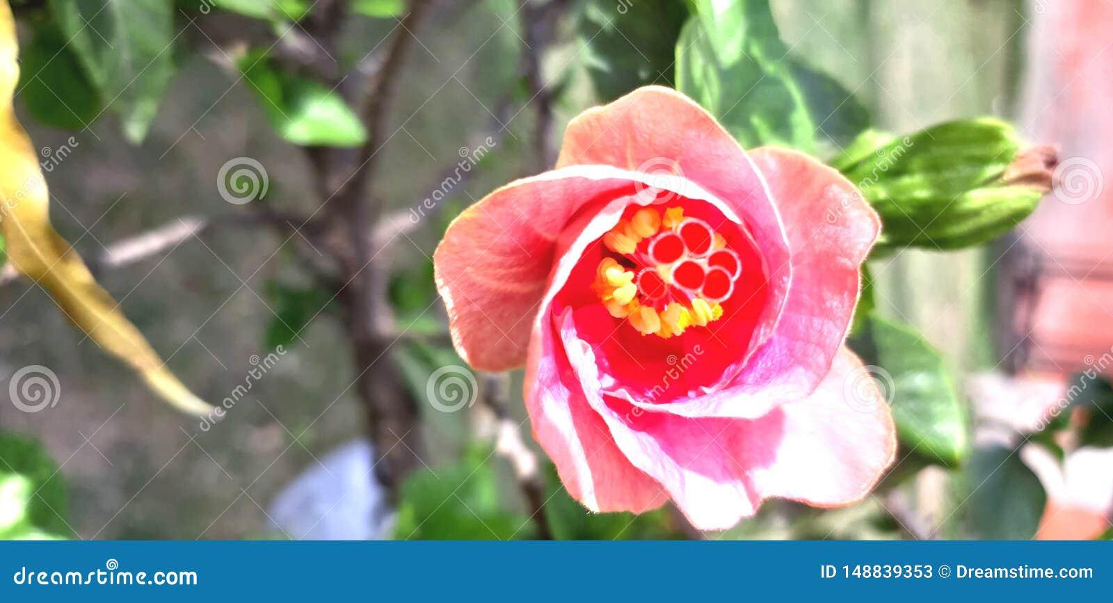 Sk?nhet av en blomma med f?rgfullofkrus