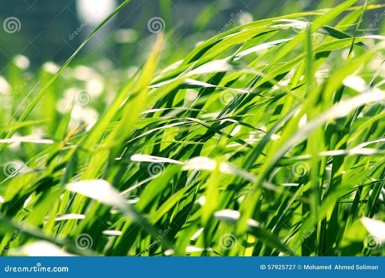 Skönhet av naturen