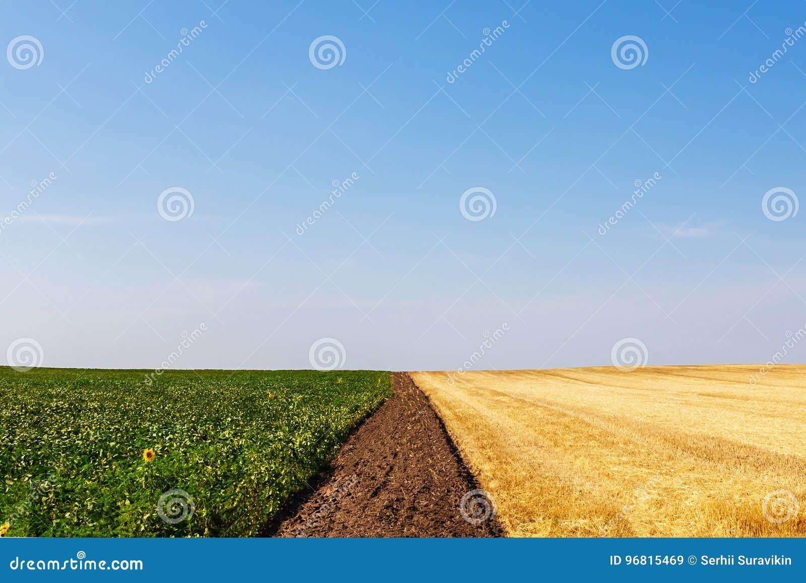 Skördade och unharvested vete- och solrosfält