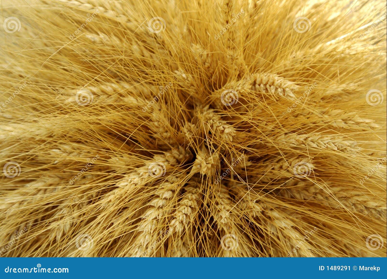 Skördat korn