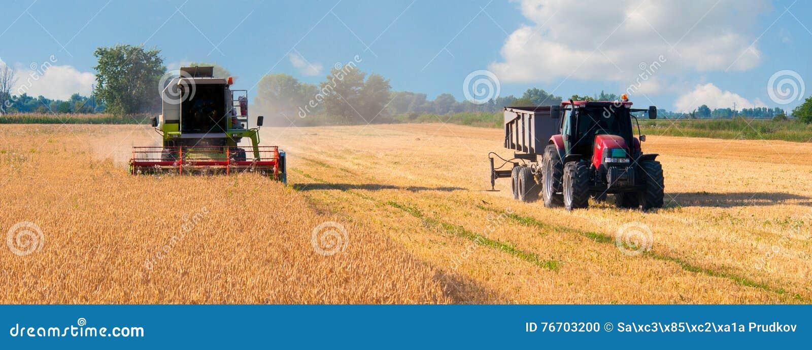 Skördearbetaresammanslutning och traktorplockningvete på solig sommar D