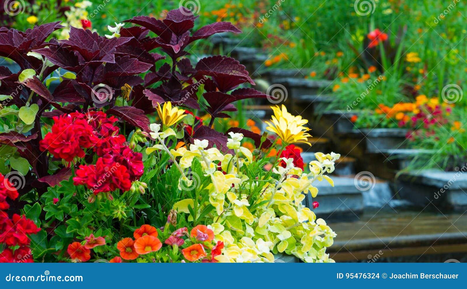 Skład kwiaty w ogródzie