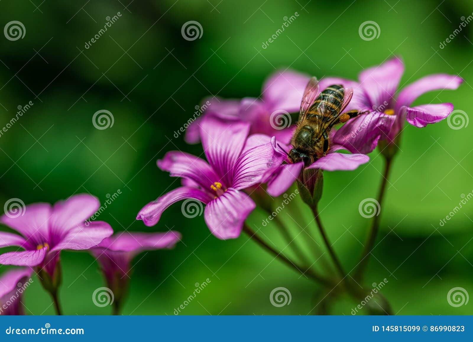 Sk?nheten av blomman